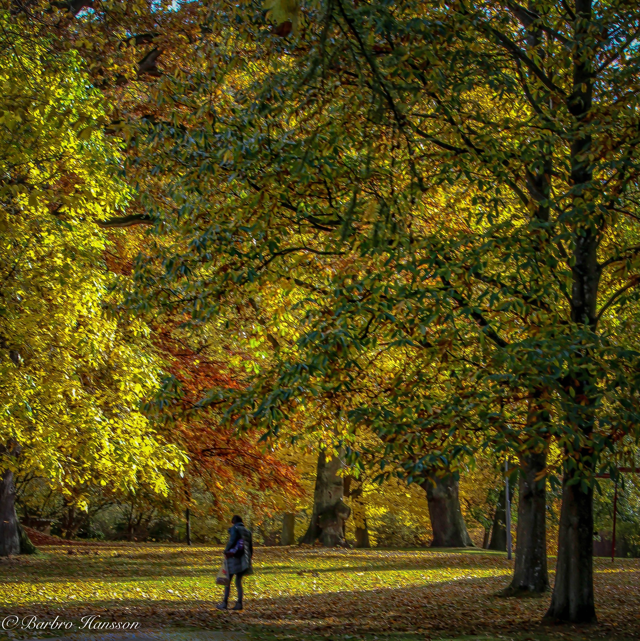 Autumn in the park by barbro.hansson.9