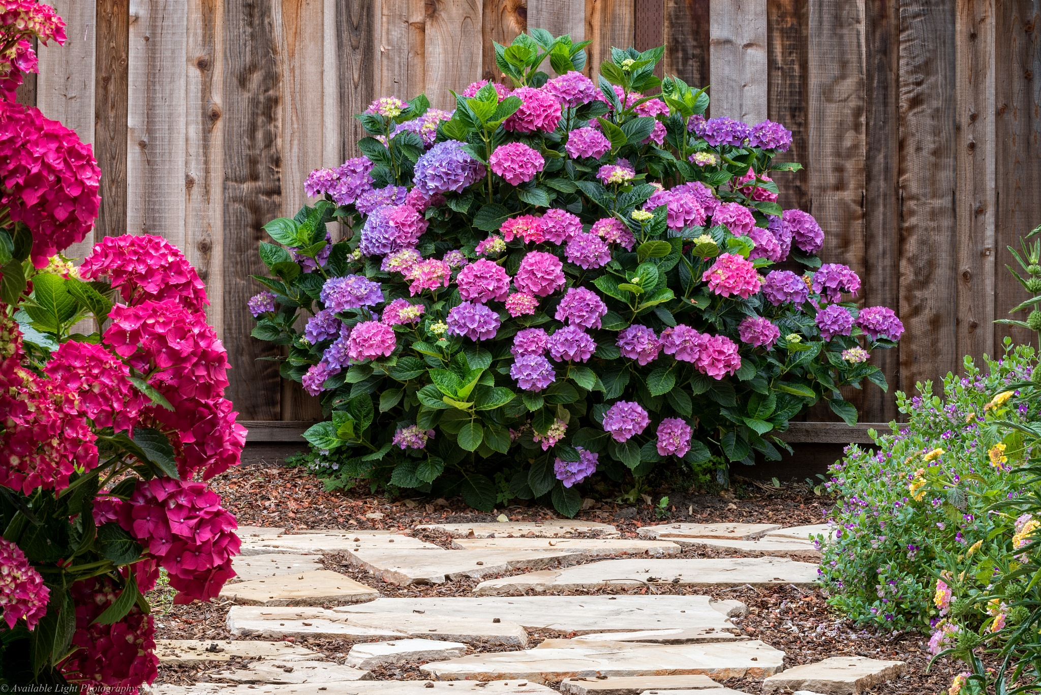 Backyard color by Available Light Photography
