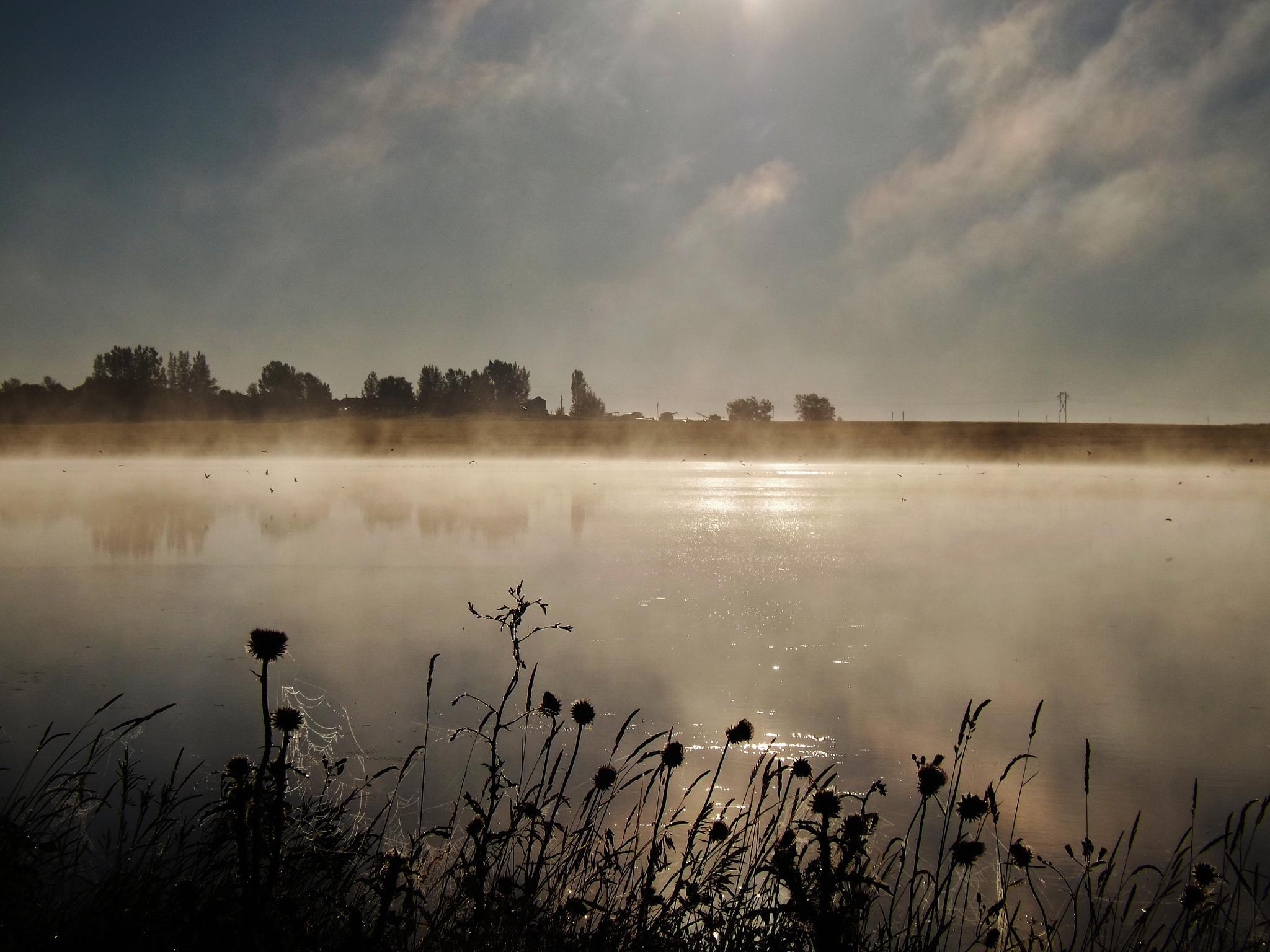 misty days what my third eye saw by Rhyland Cottingham