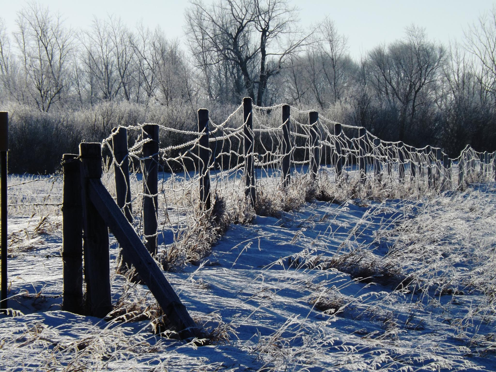 frost line- what my third eye saw by Rhyland Cottingham
