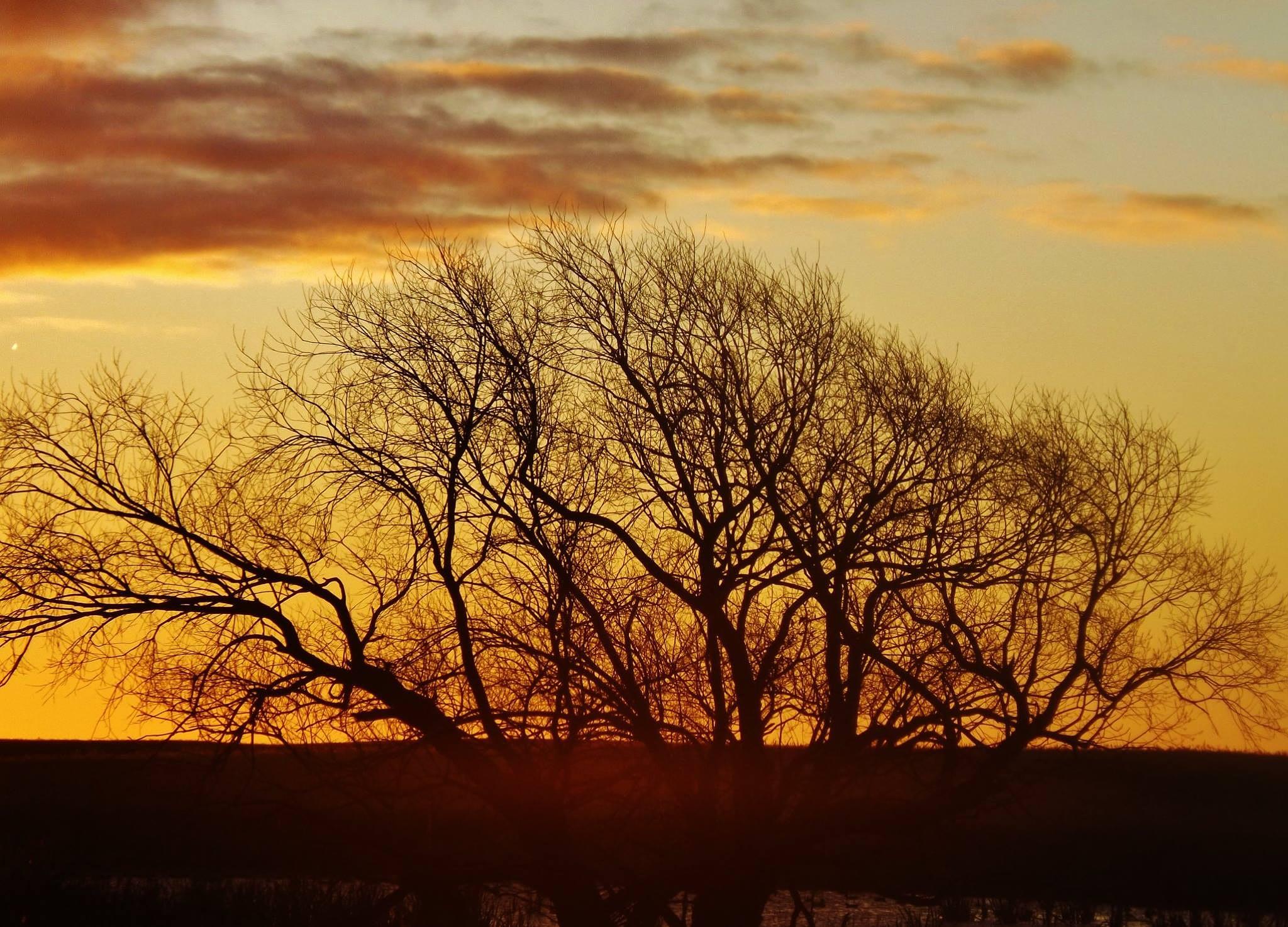 morning shot by Rhyland Cottingham