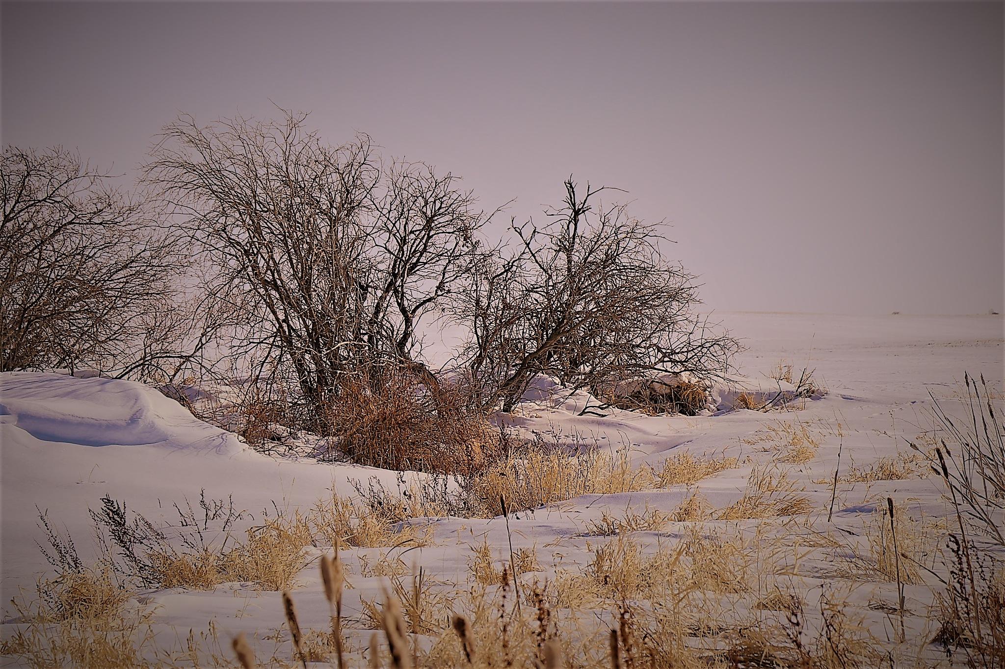 winter wonderland by Rhyland Cottingham
