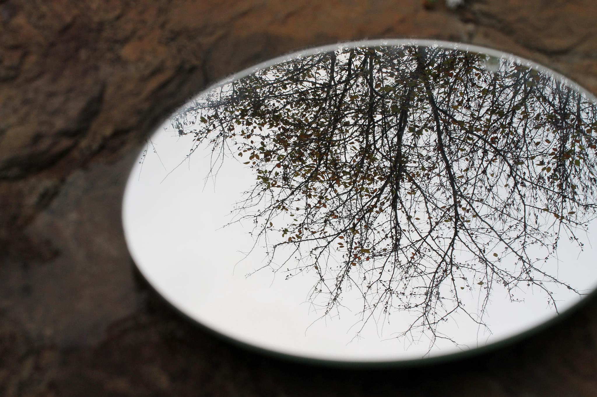 Fall Reflections by kasey.bragg