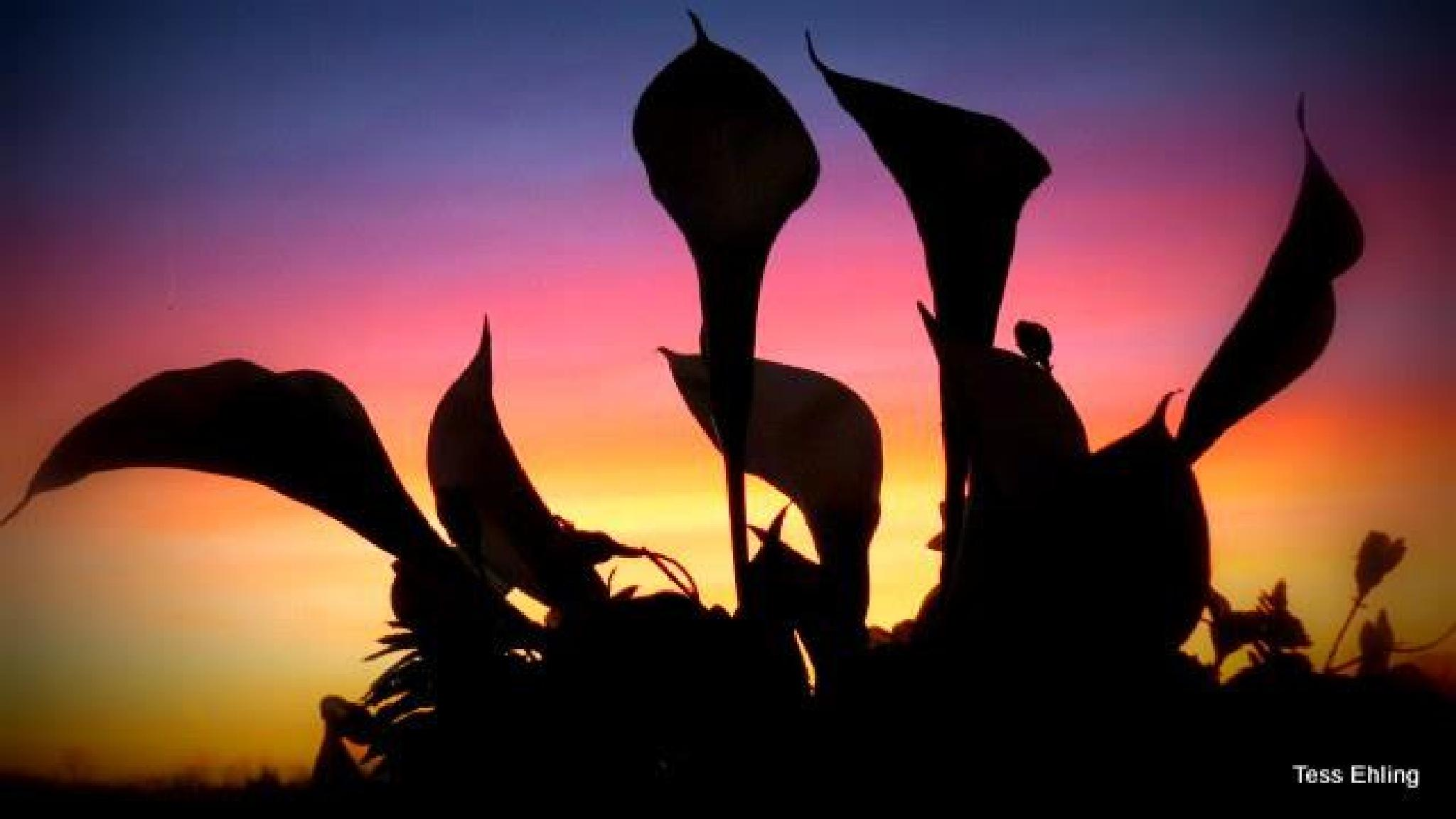 Abstract Sun Set by teresa.ehling