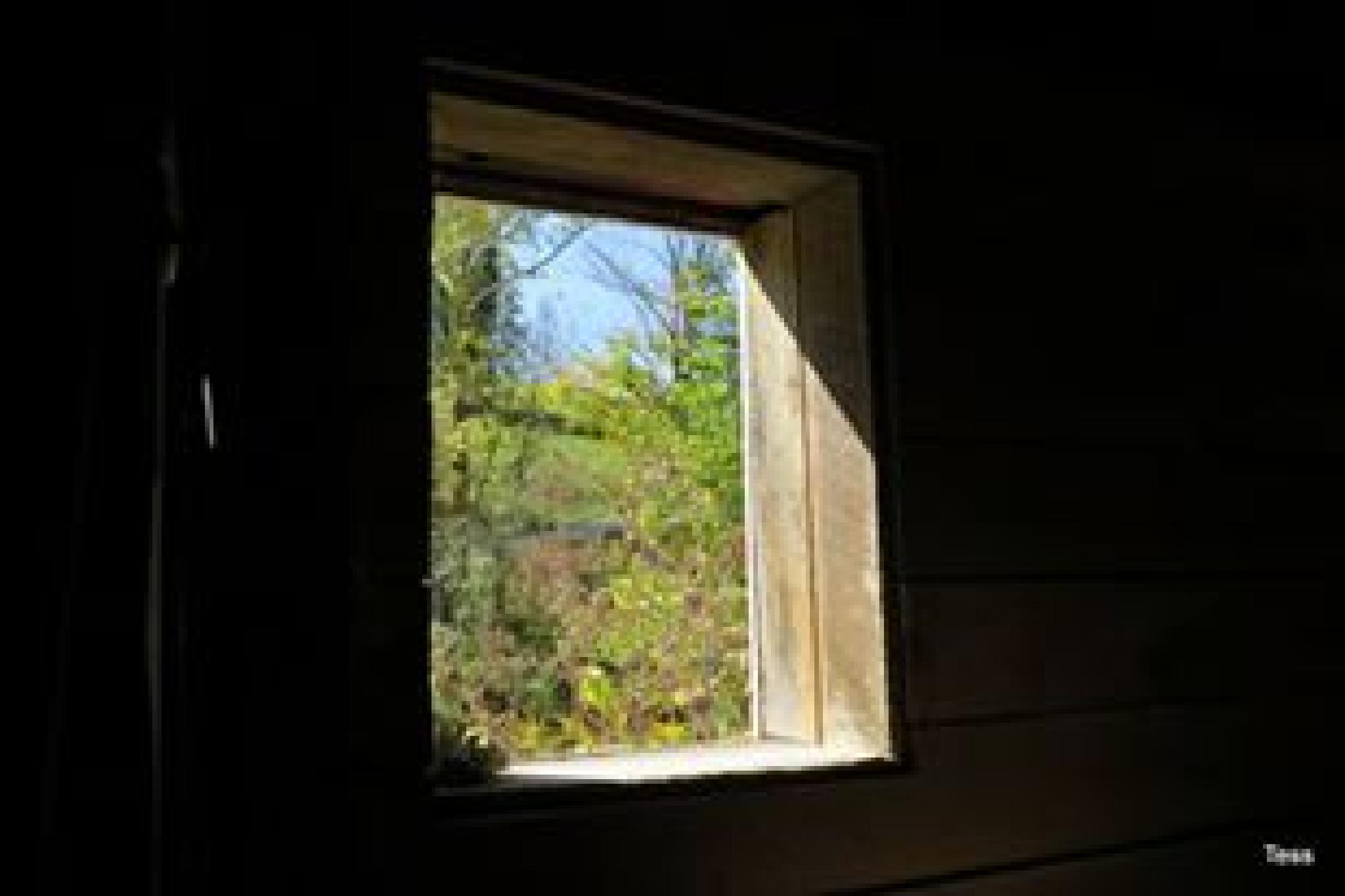A window into Spring by teresa.ehling