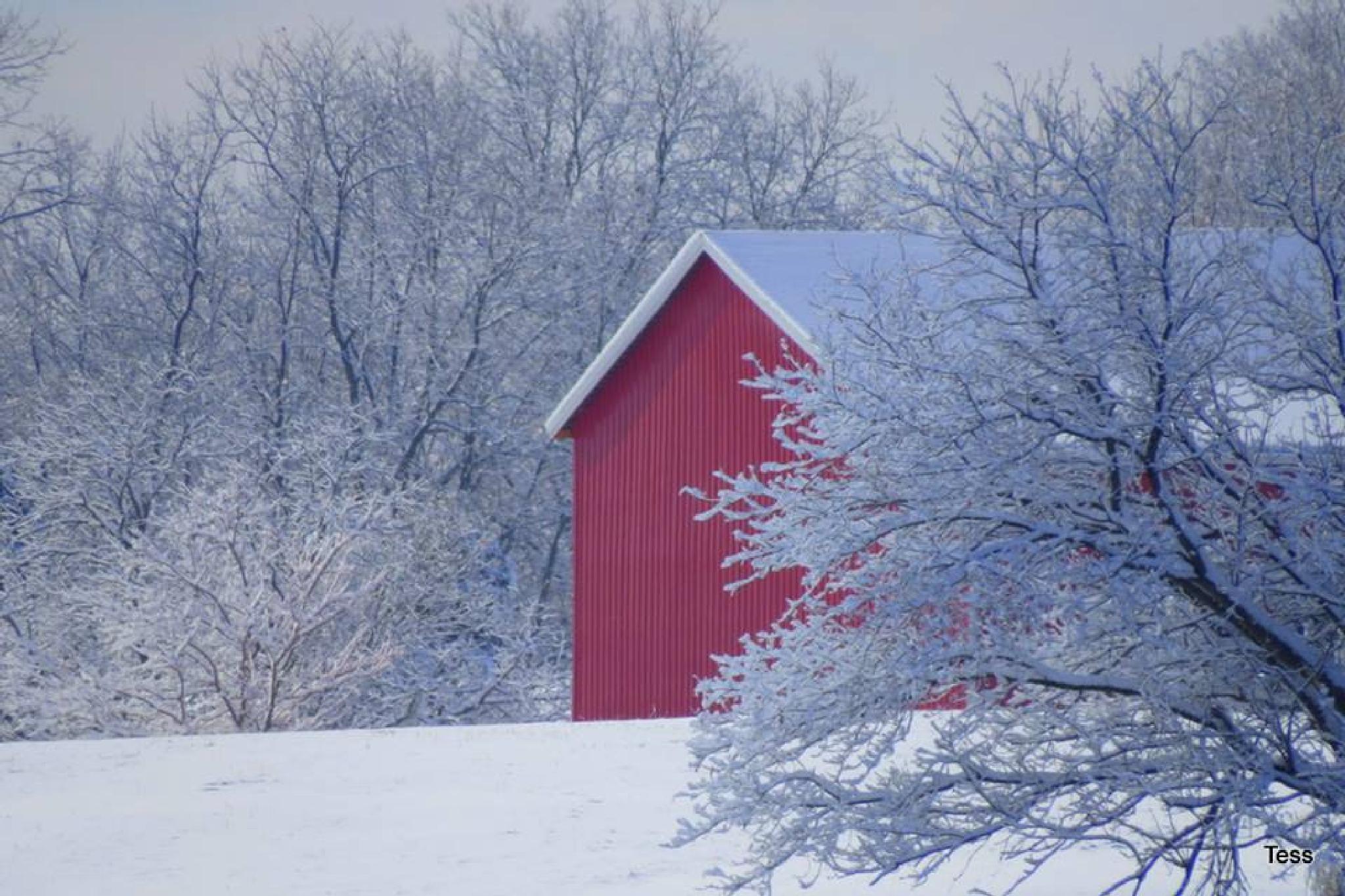 My Neighbors barn  by teresa.ehling