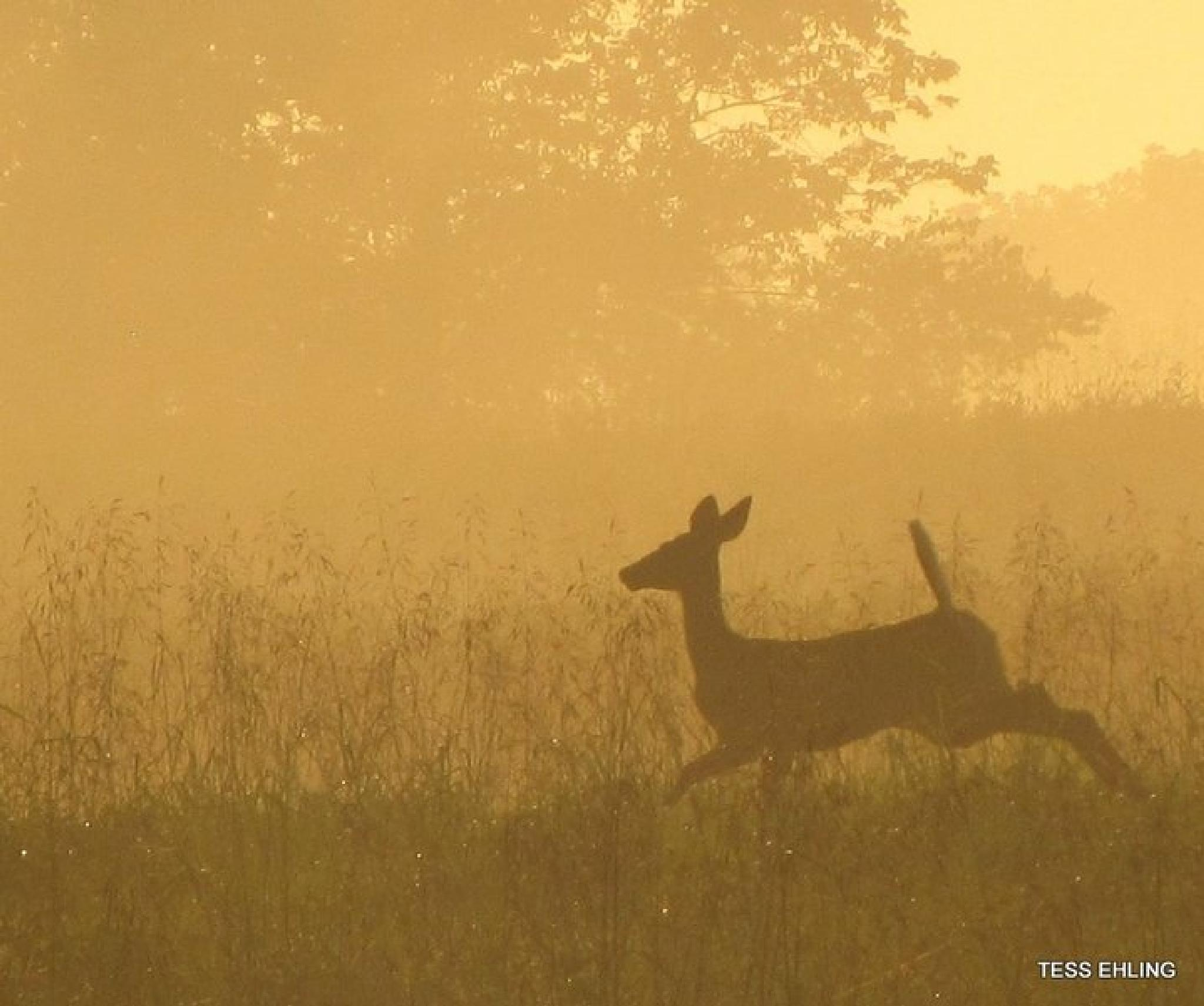 Deer in the Mist II by teresa.ehling