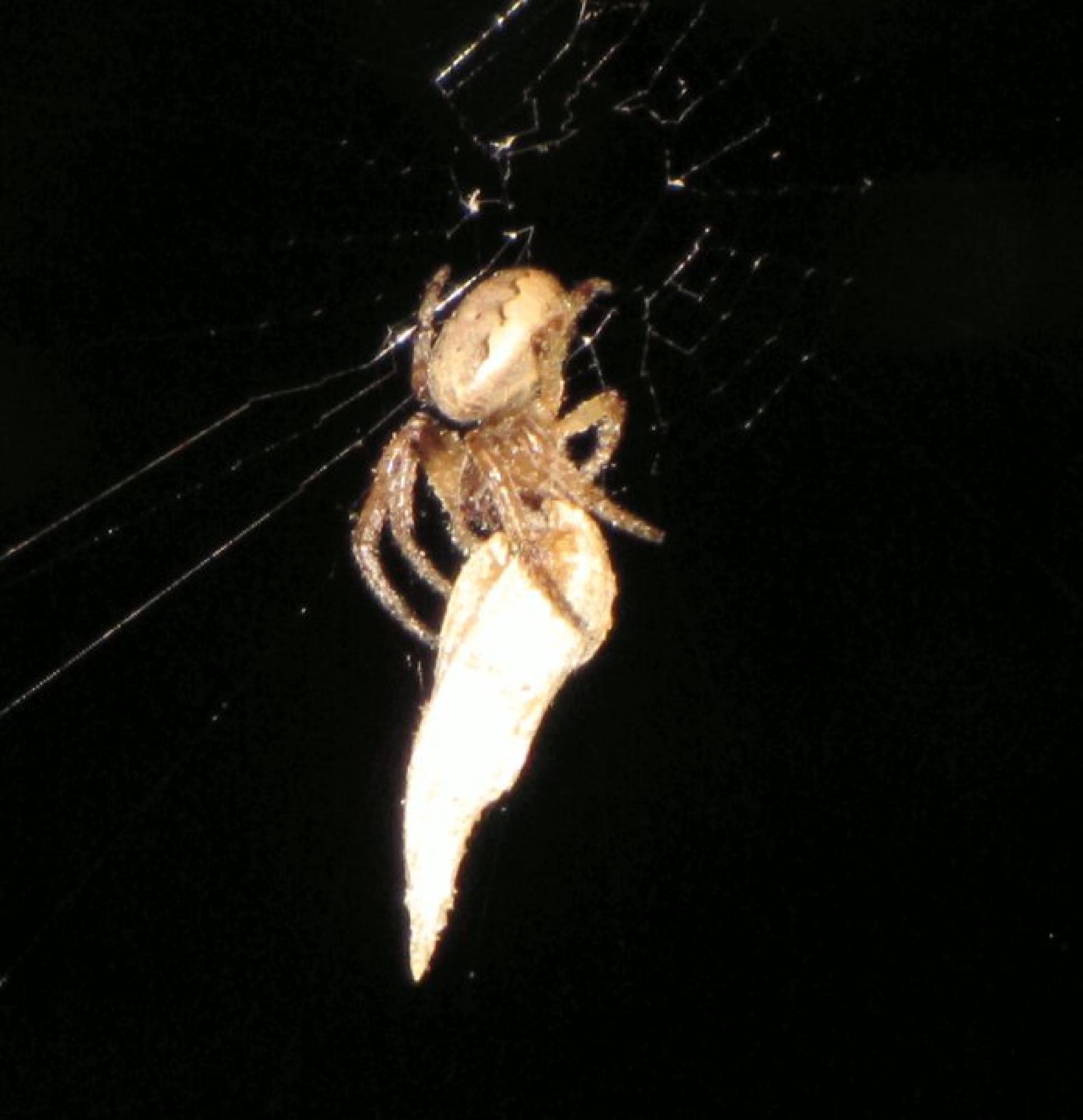 Spider Having dinner by teresa.ehling