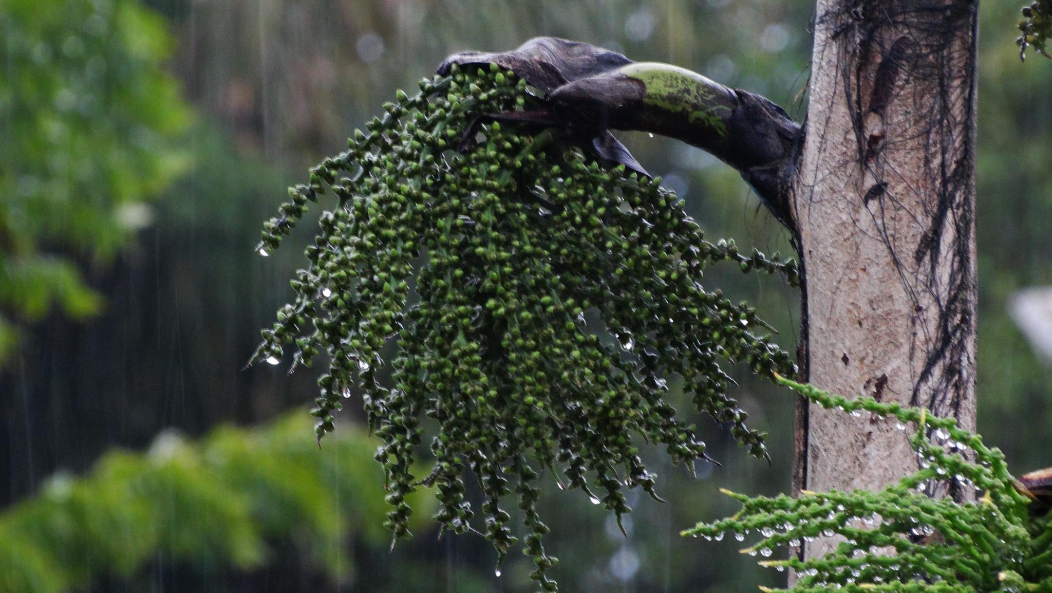 Domingo de chuva by onofre.martins