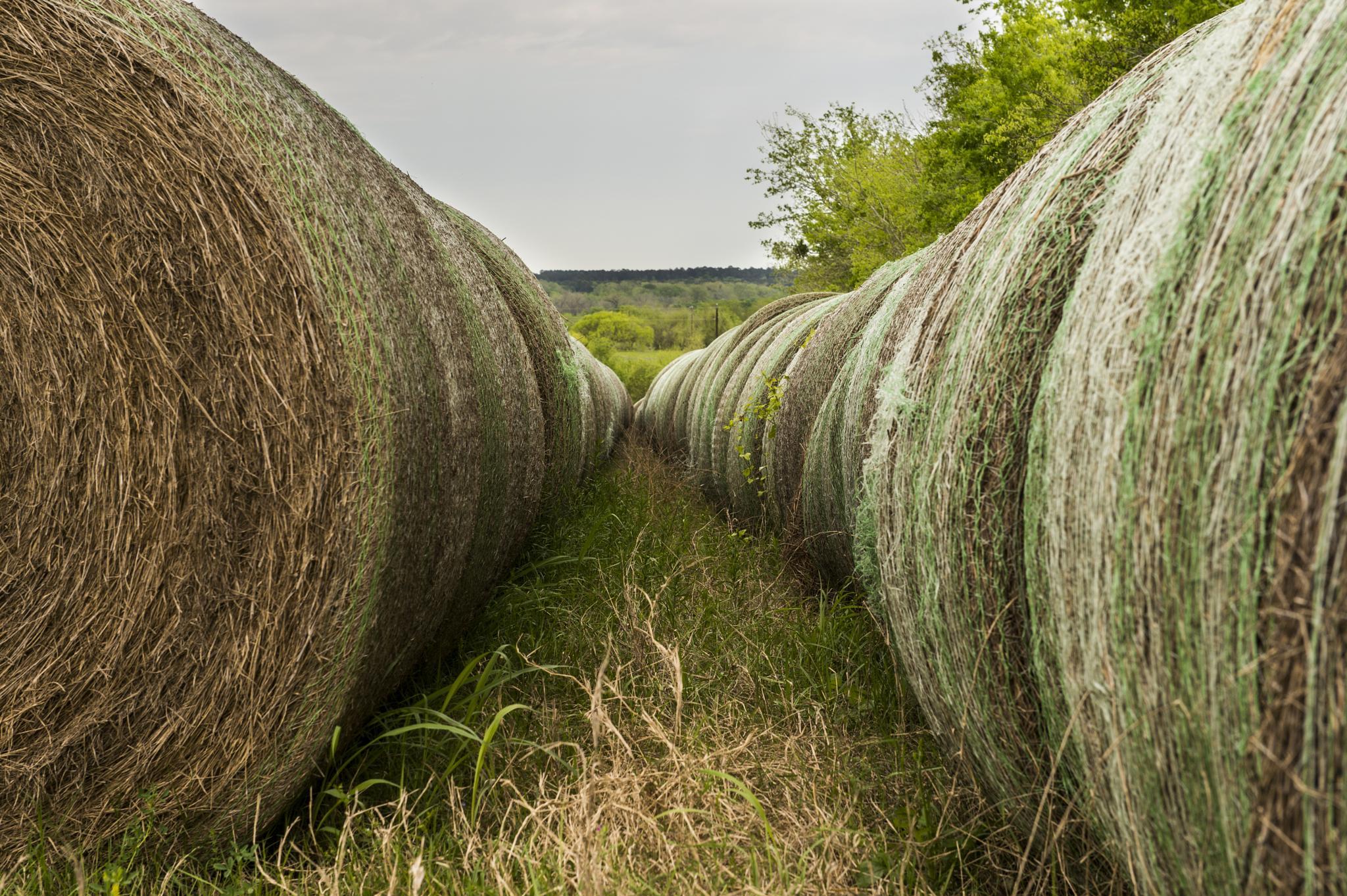 Hay Tunnel by Carl Scott