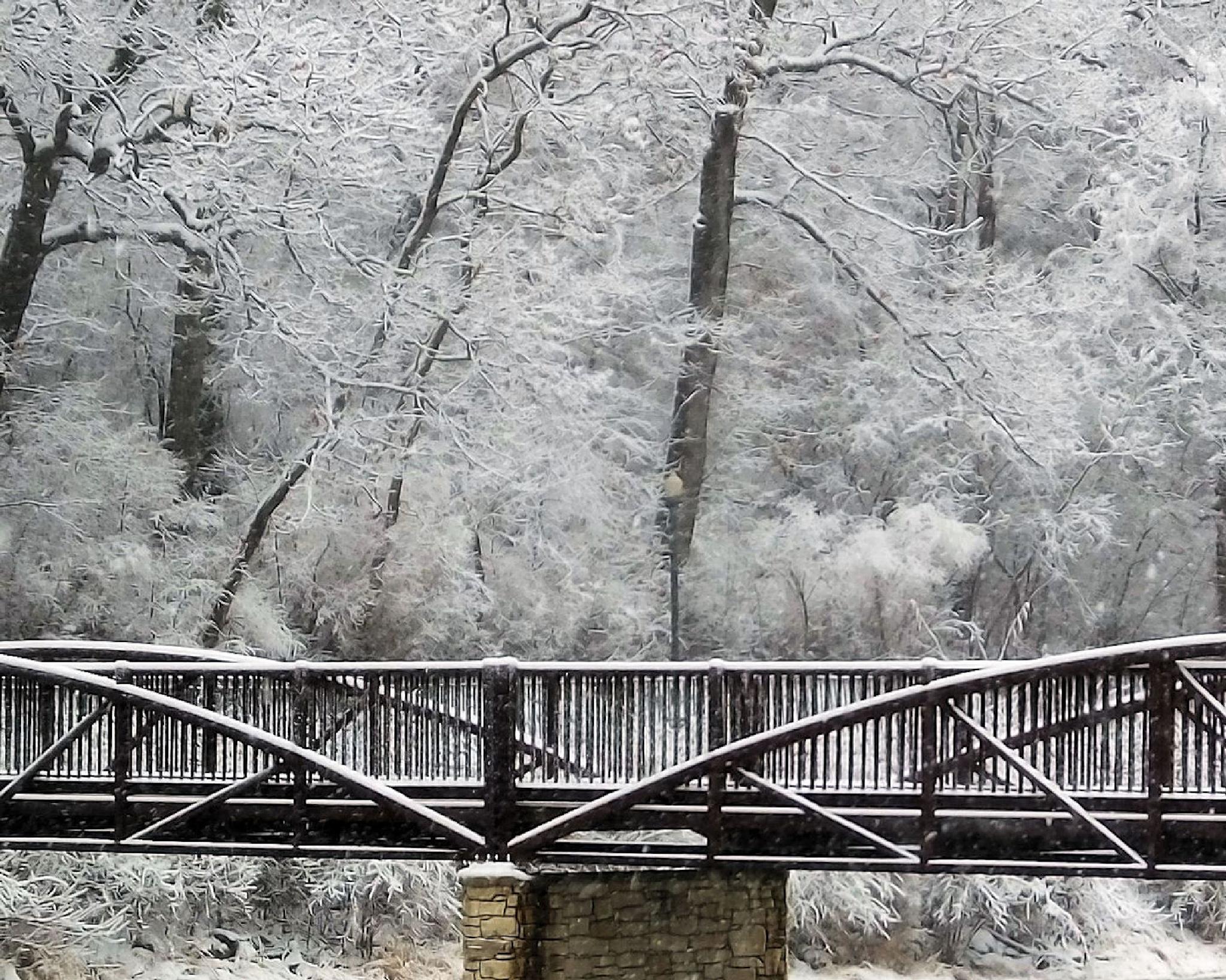 A Winter Day by Lynn A Marie