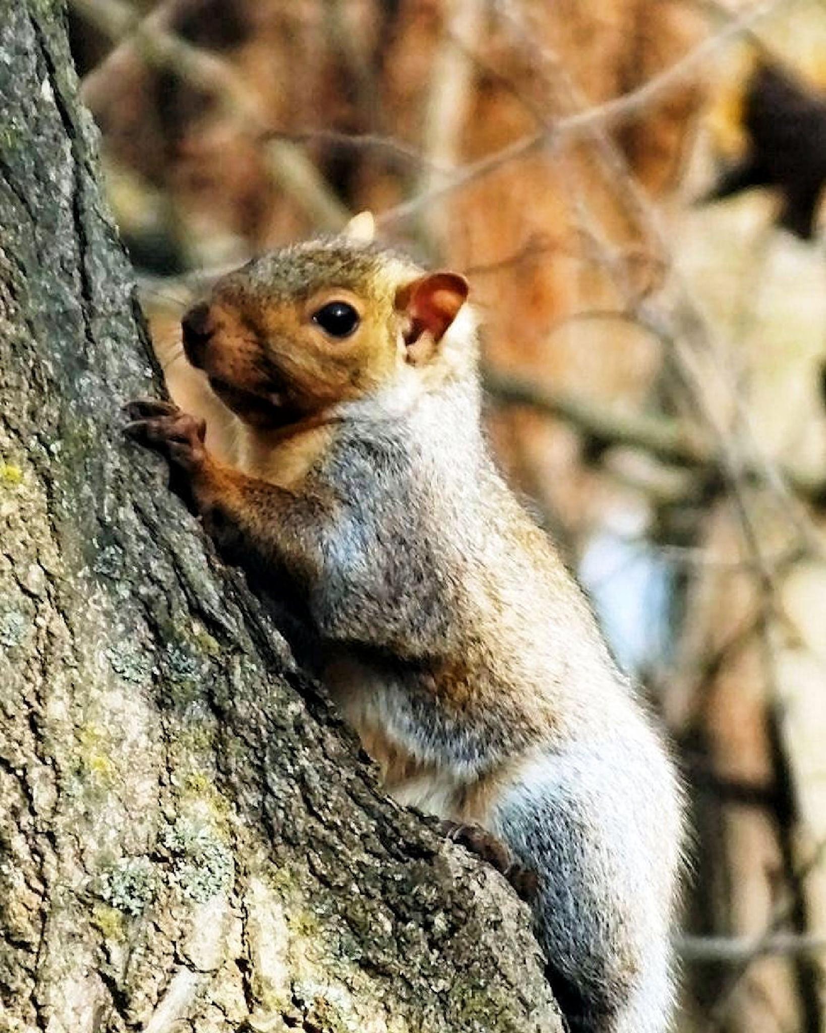 Squirrl In Tree by Lynn A Marie