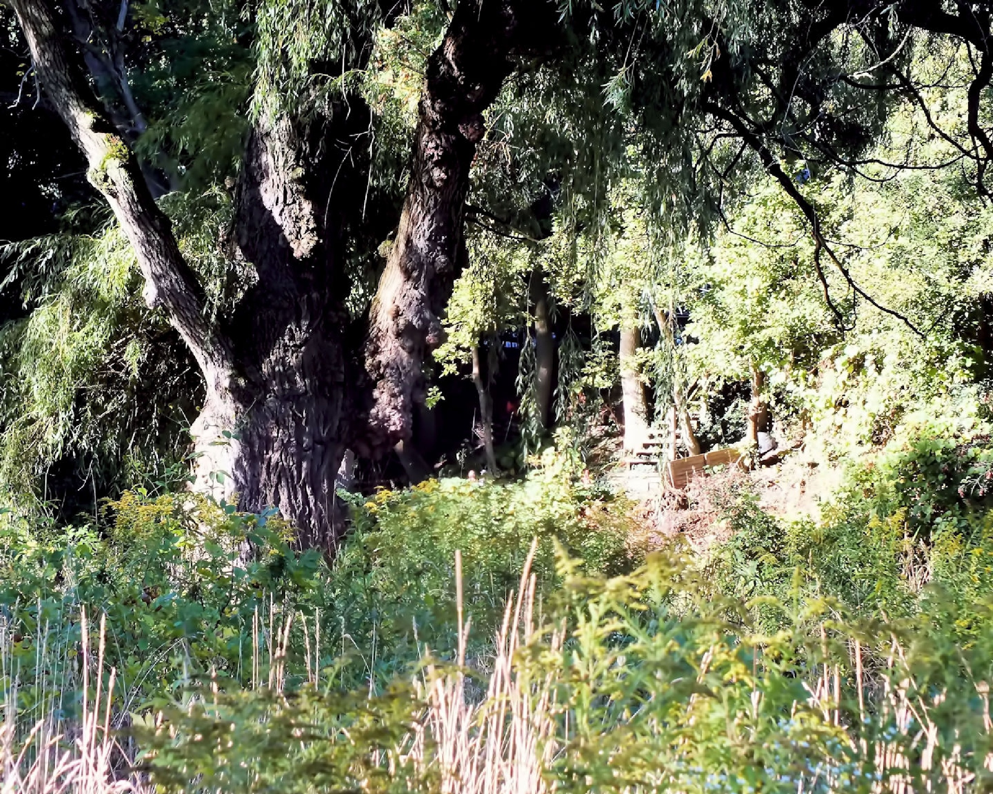Willow On The River by Lynn A Marie
