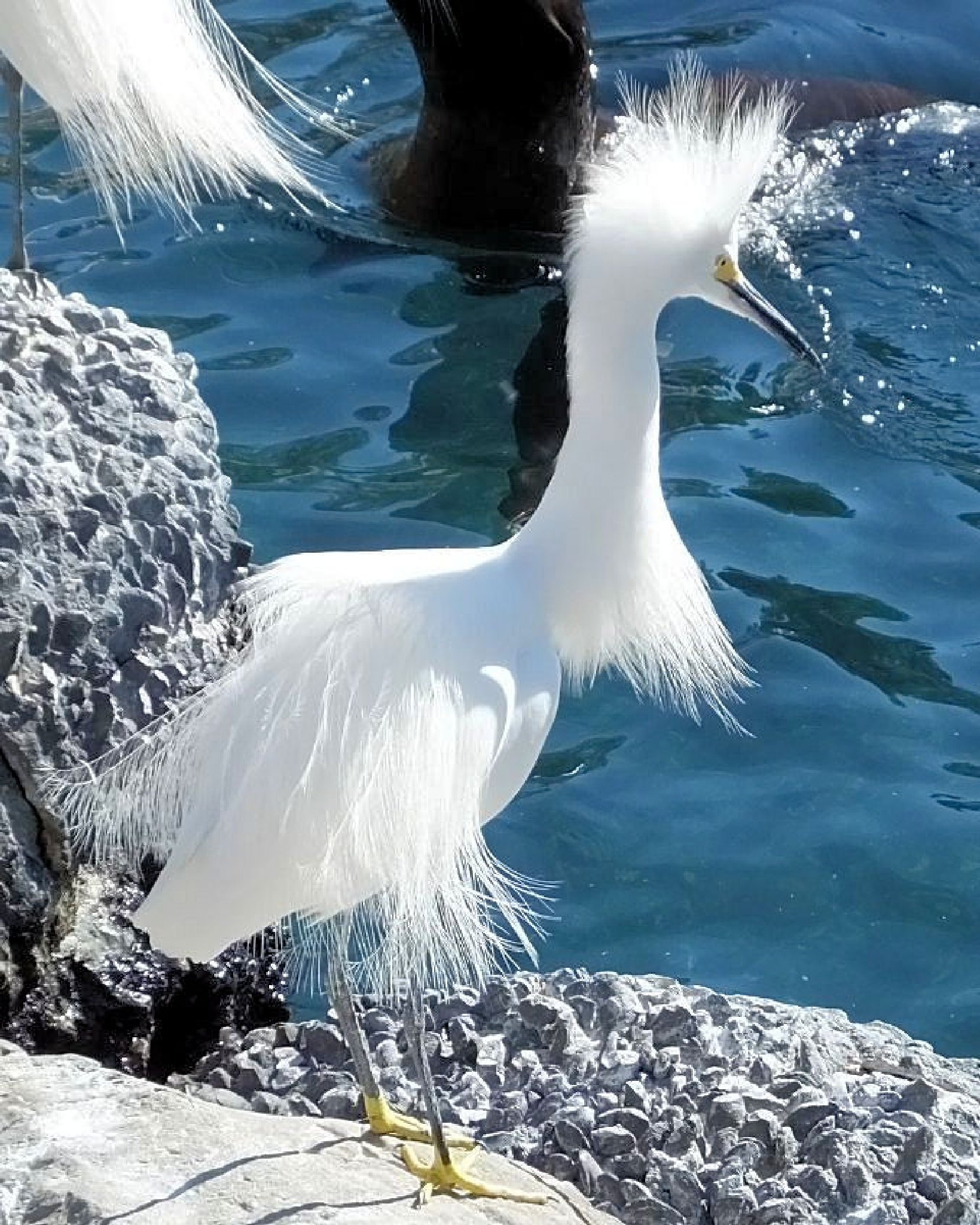 White Bird On Rocks by Lynn A Marie