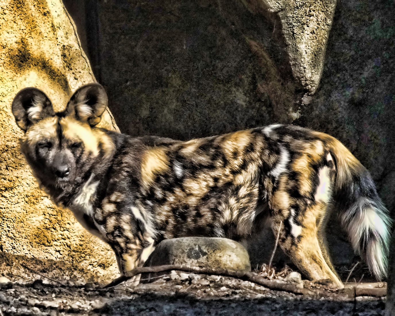 Painted Dog Portrait by Lynn A Marie