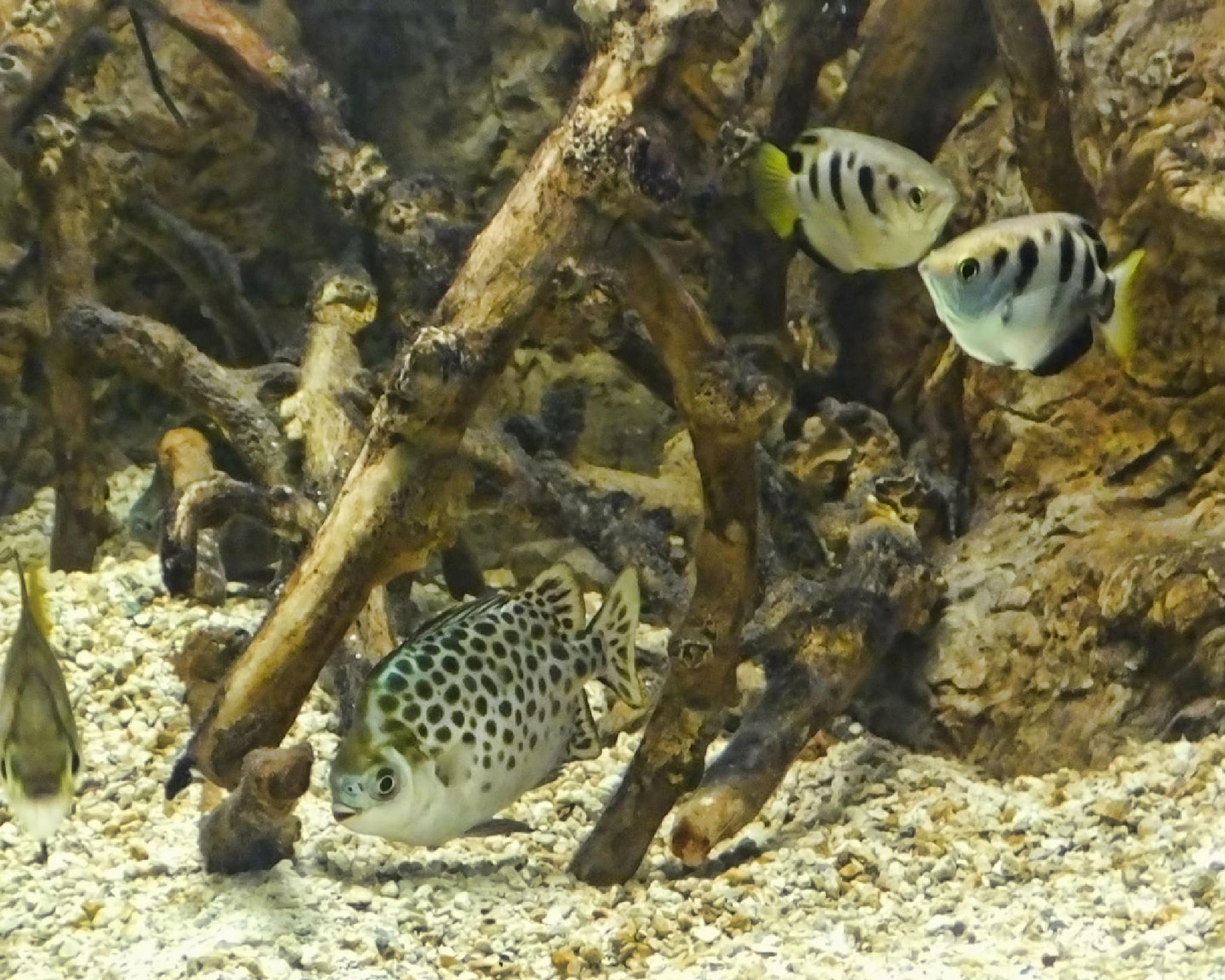 Tropical Fish by Lynn A Marie