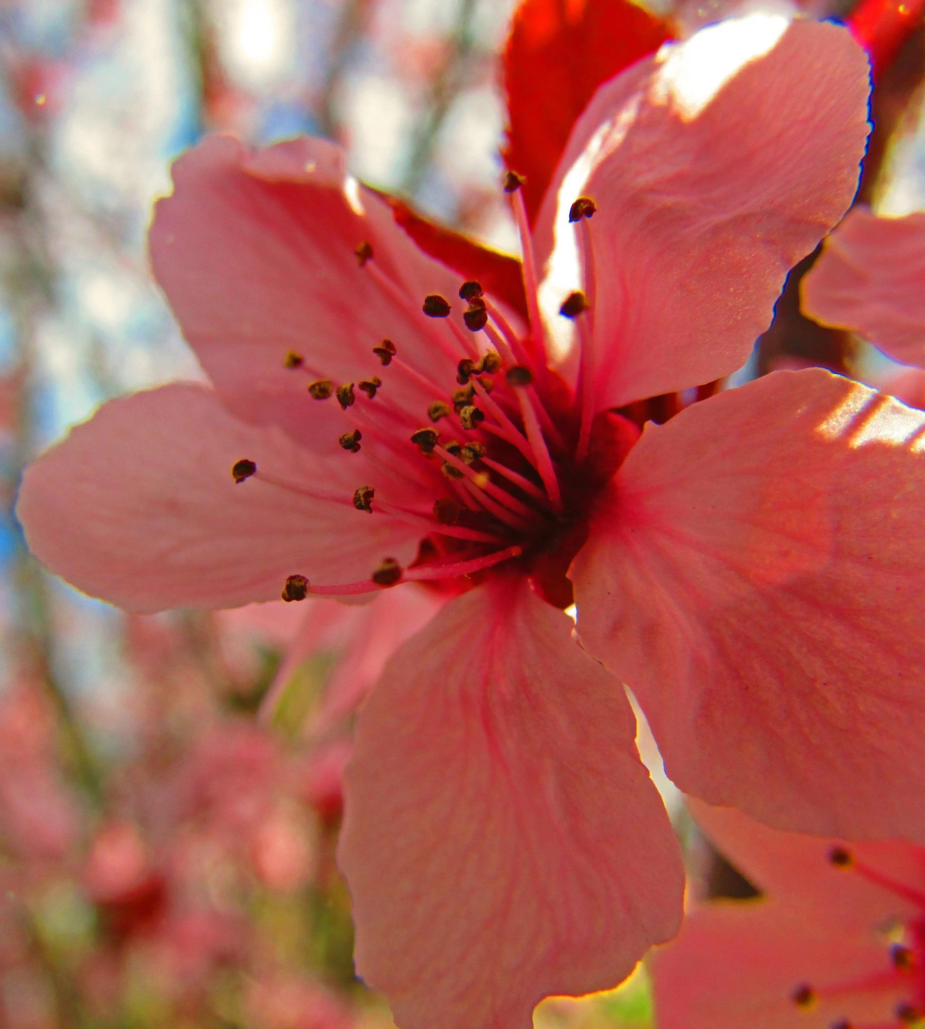 Wild Cherry Flower by Cina De Moura