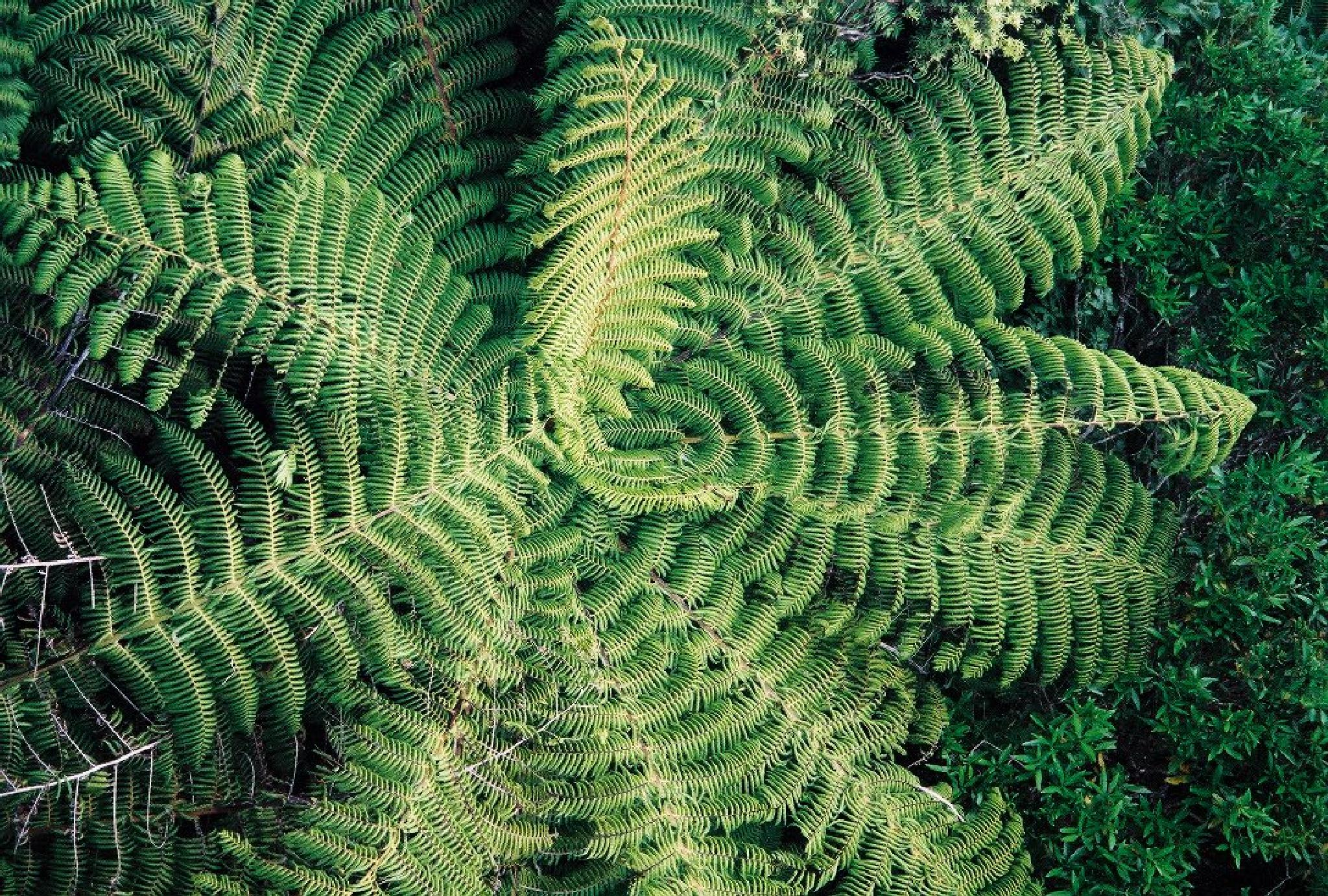 Crown of the Tree Fern by kathy.kelly.31924