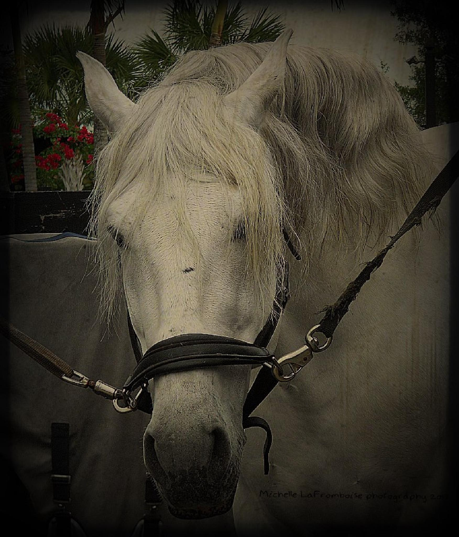 Andalusian stallion #2 by greenmountaingirl