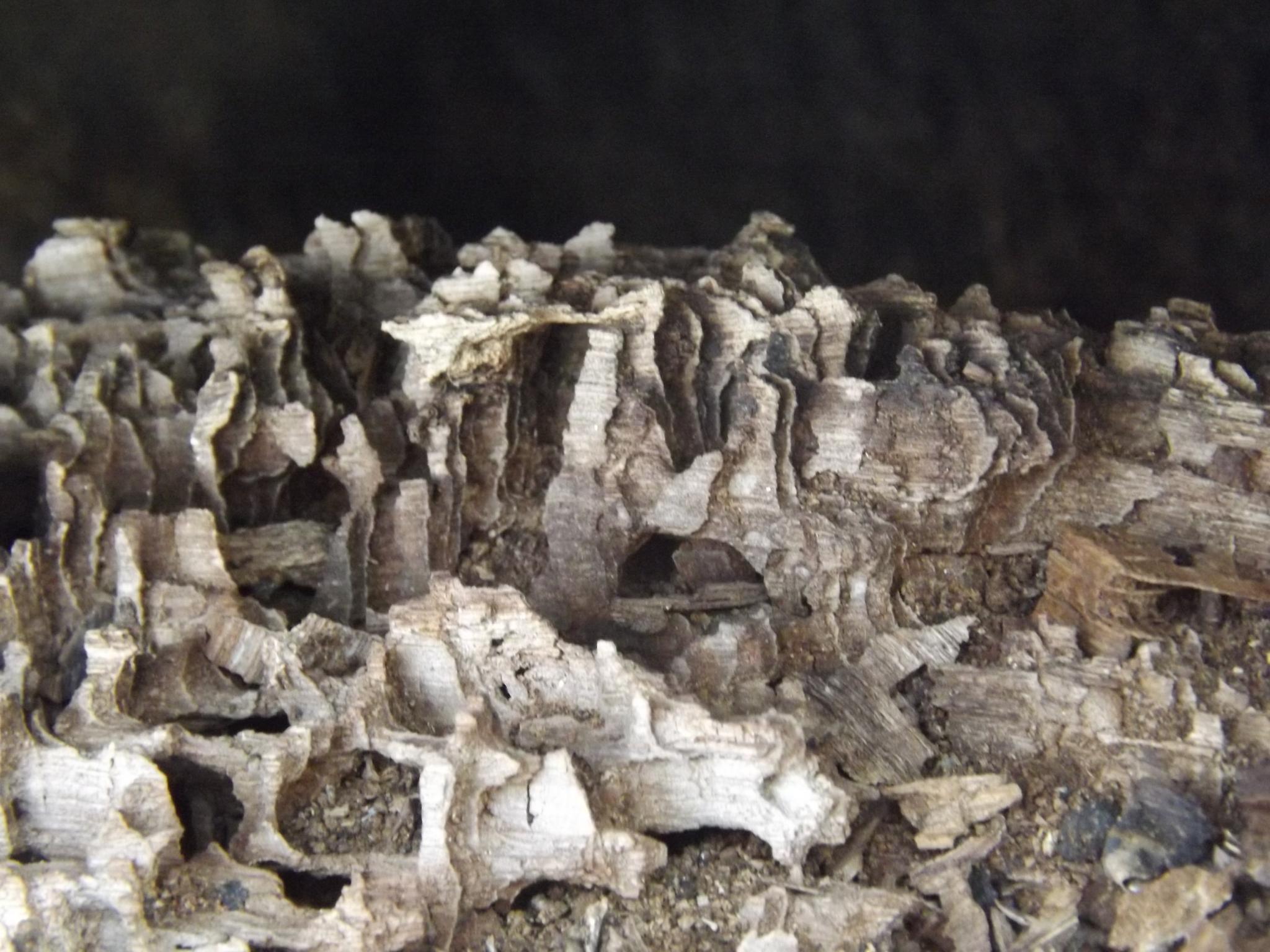 Decaying Oak by Paul