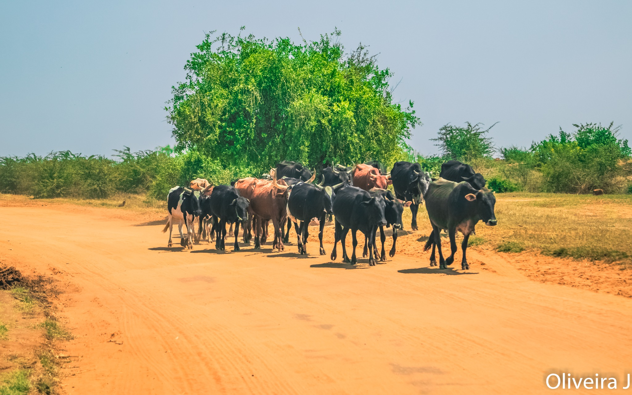 ON AN AFRICAN ROAD by joseoliveira1694