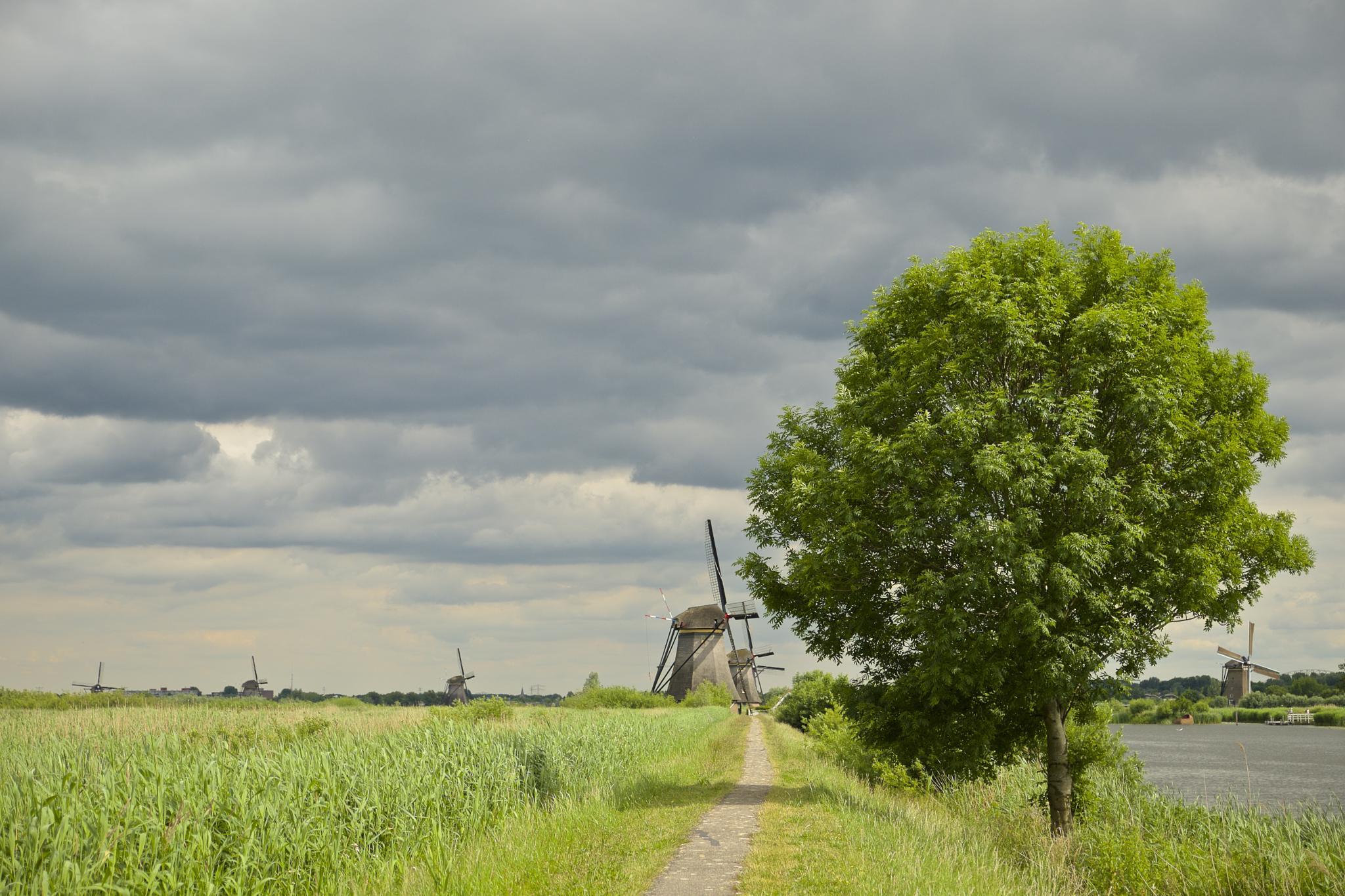 Windmills by Ropje