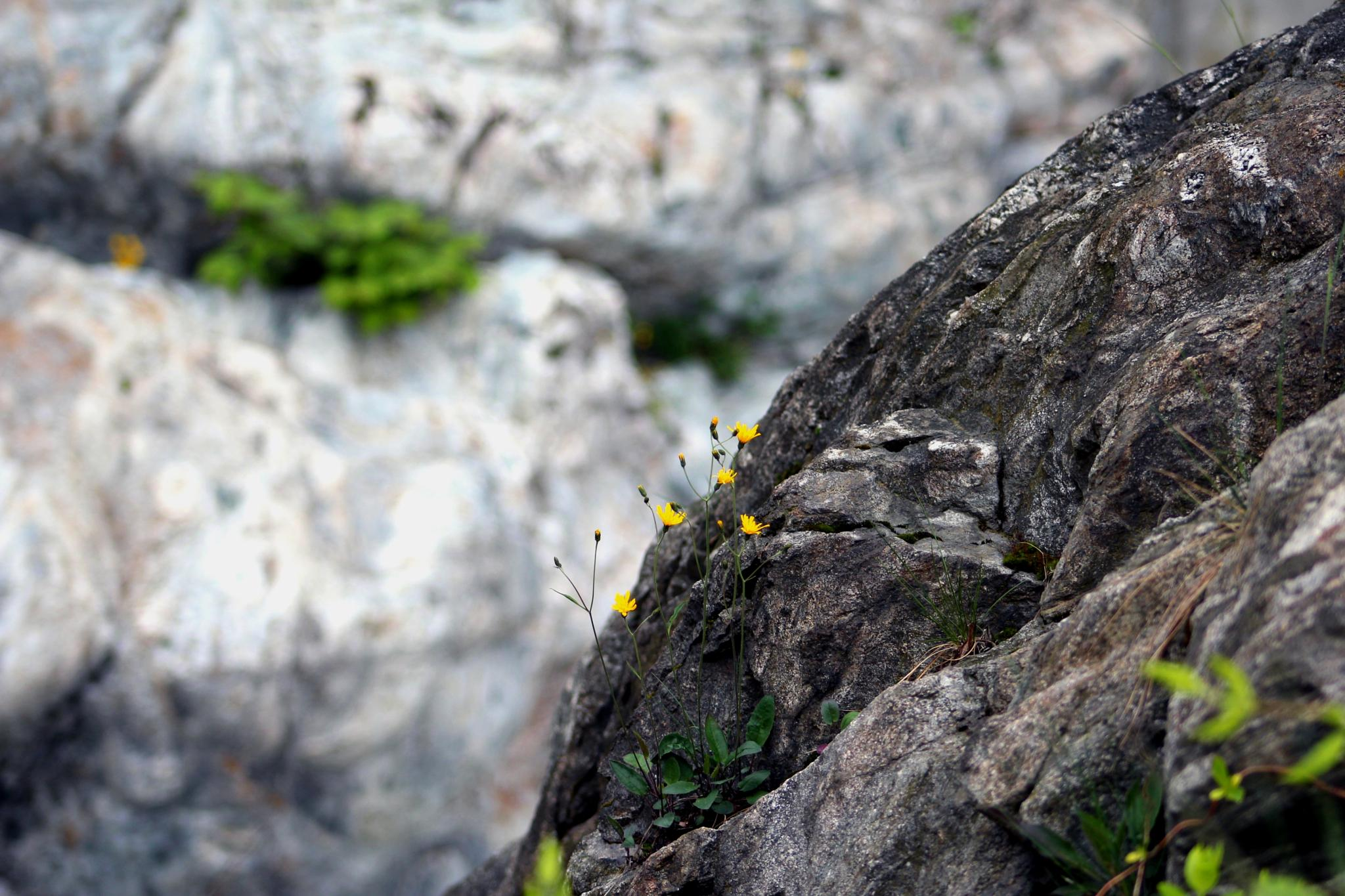 flowers on the edge by LoryC