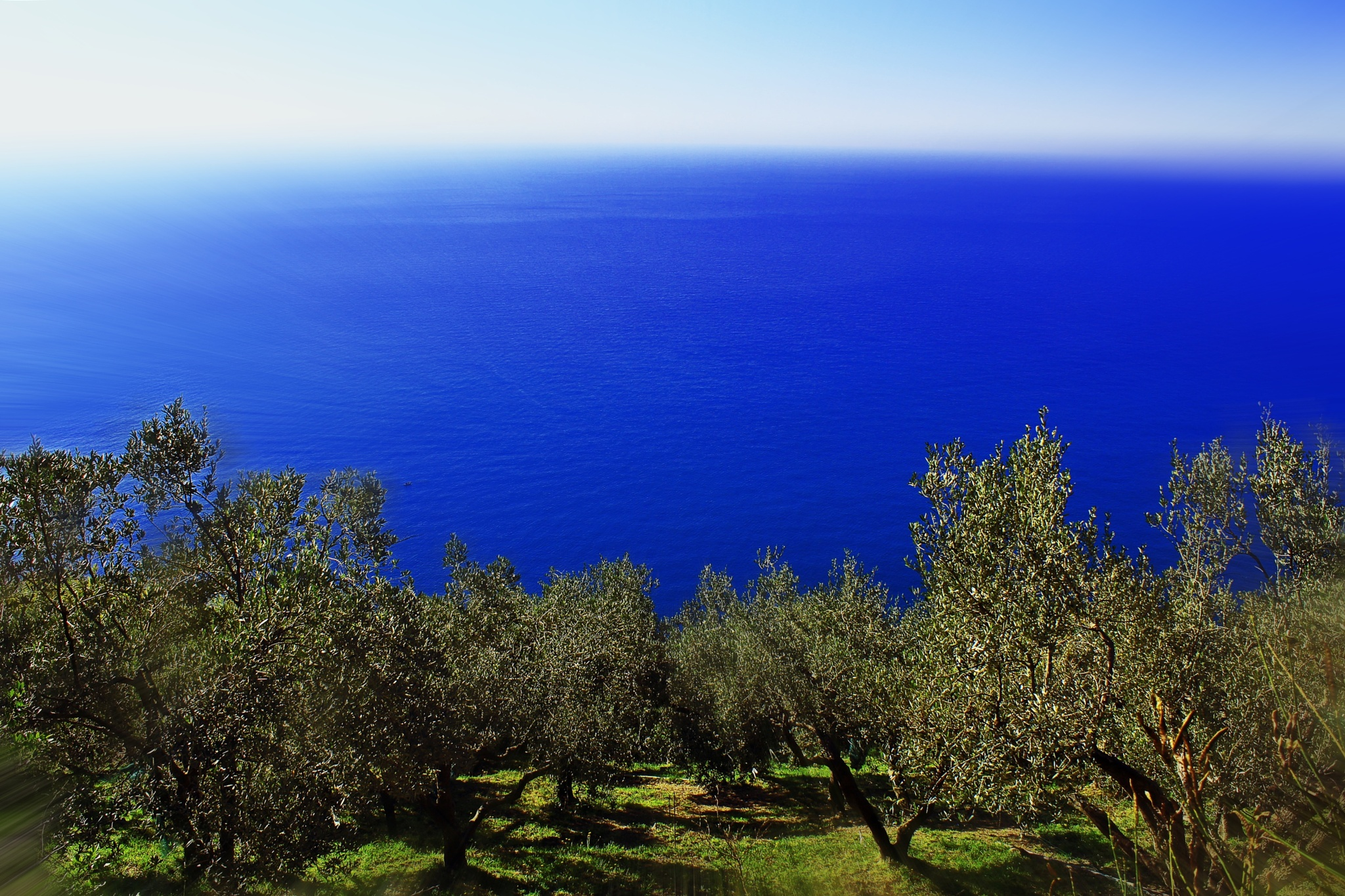 Olive grove by LoryC