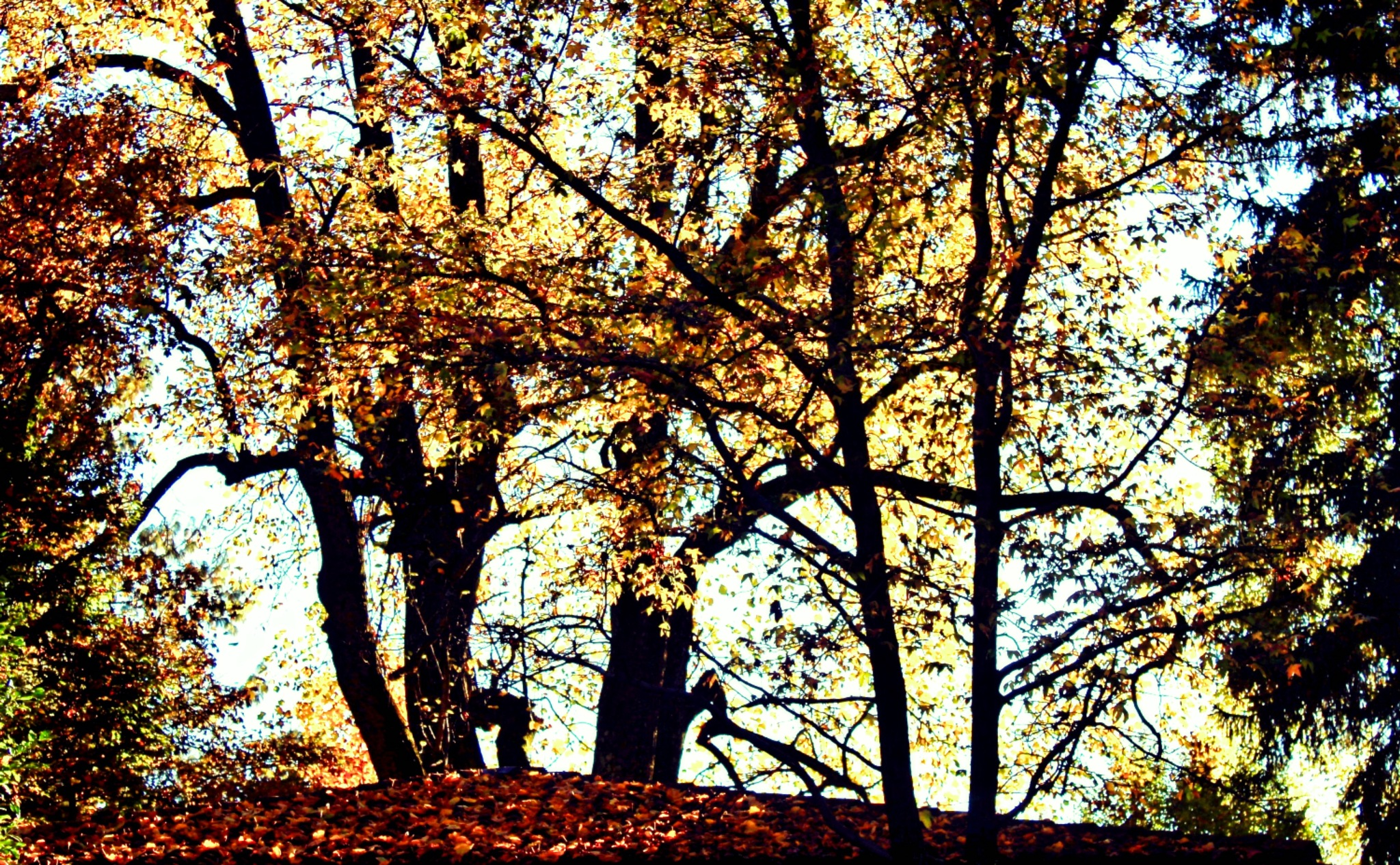 Autumn Silhouettes by LoryC