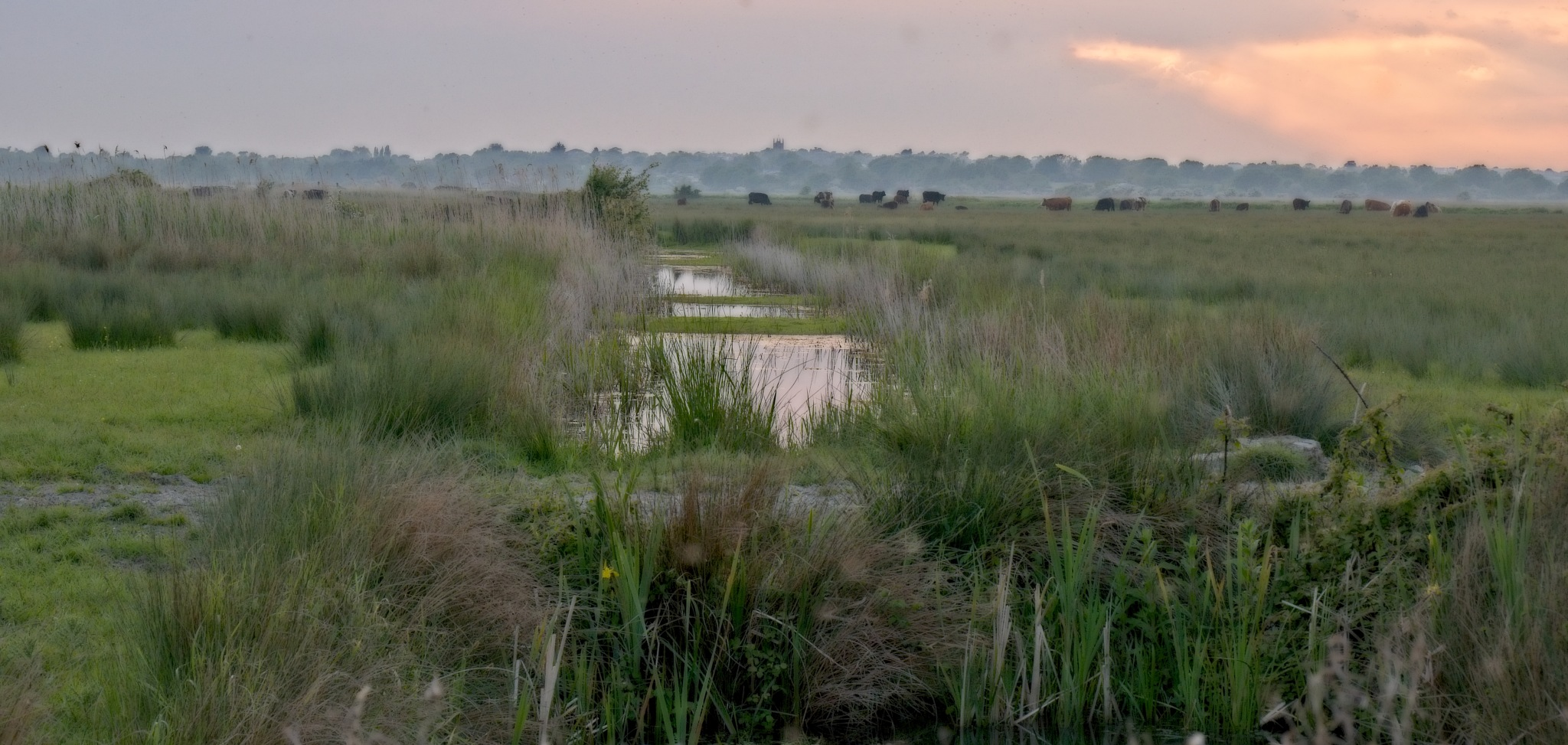SUSSEX MARSHES by BugOlsson
