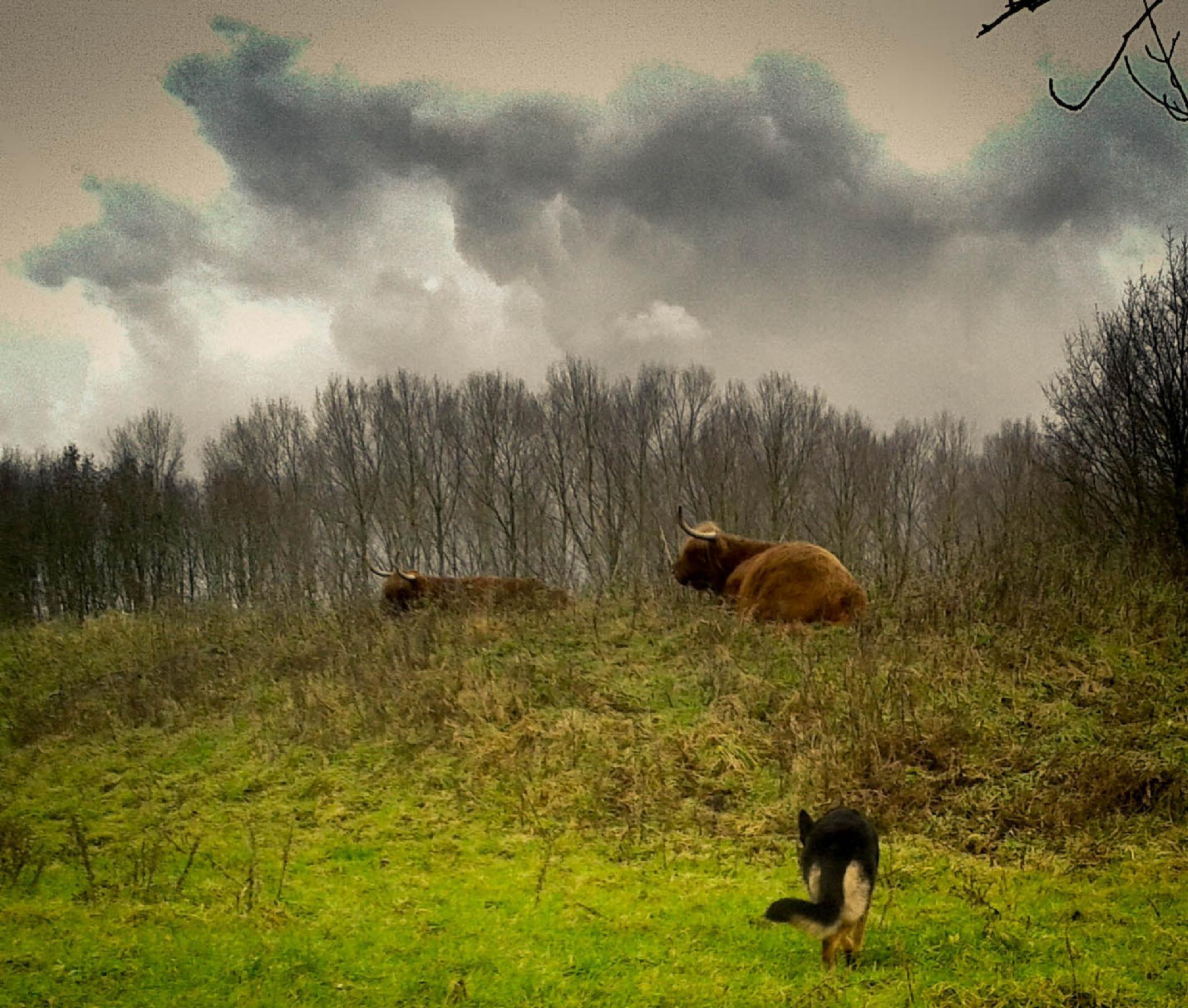 Untitled by Reddogpics