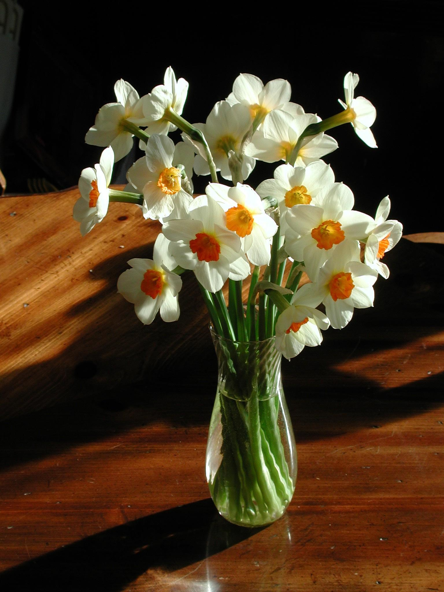 Daffodils by wes.johnson.58