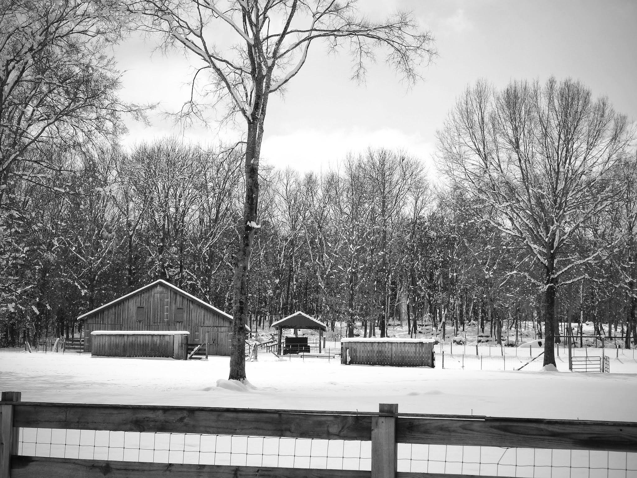 Snowy Barn by Cindy Eddy