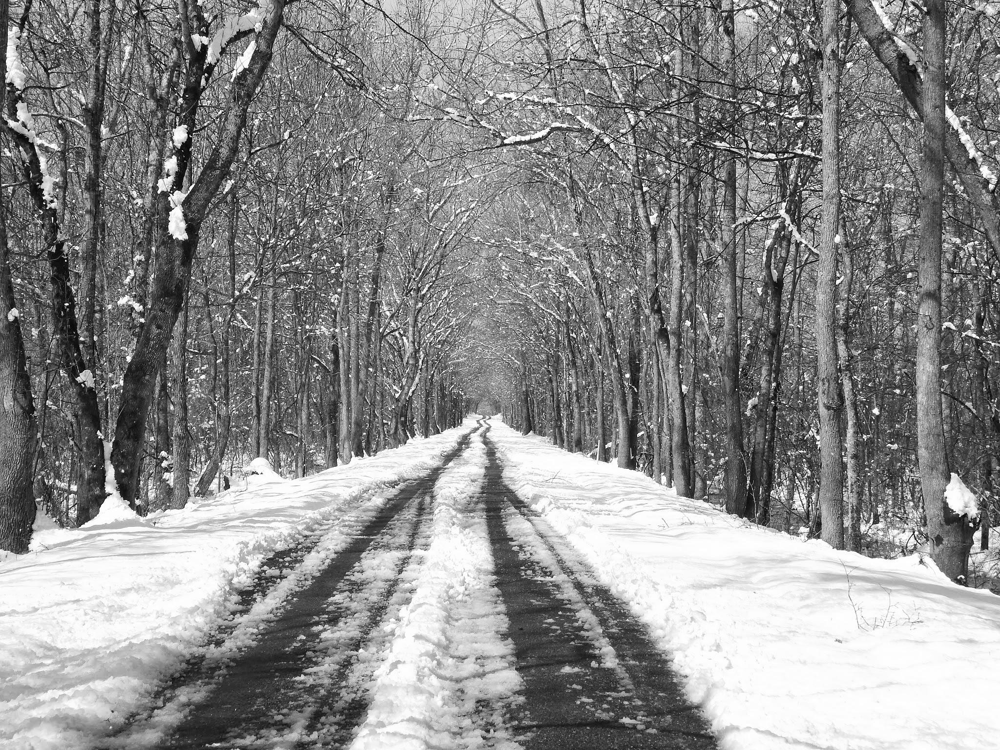 Long Snowy Road by Cindy Eddy