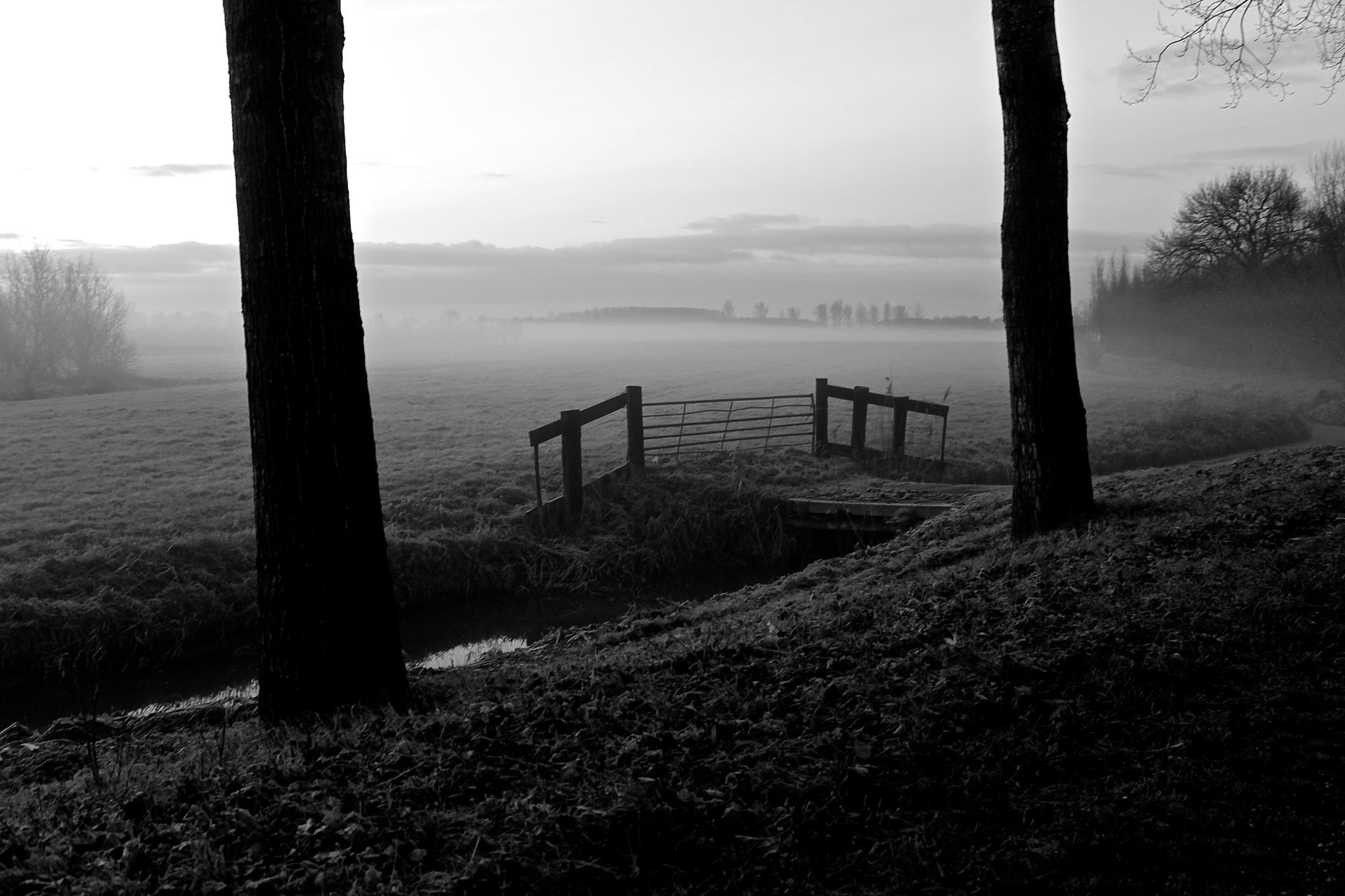 Fence, tree, fog and sky ... by John Weijts
