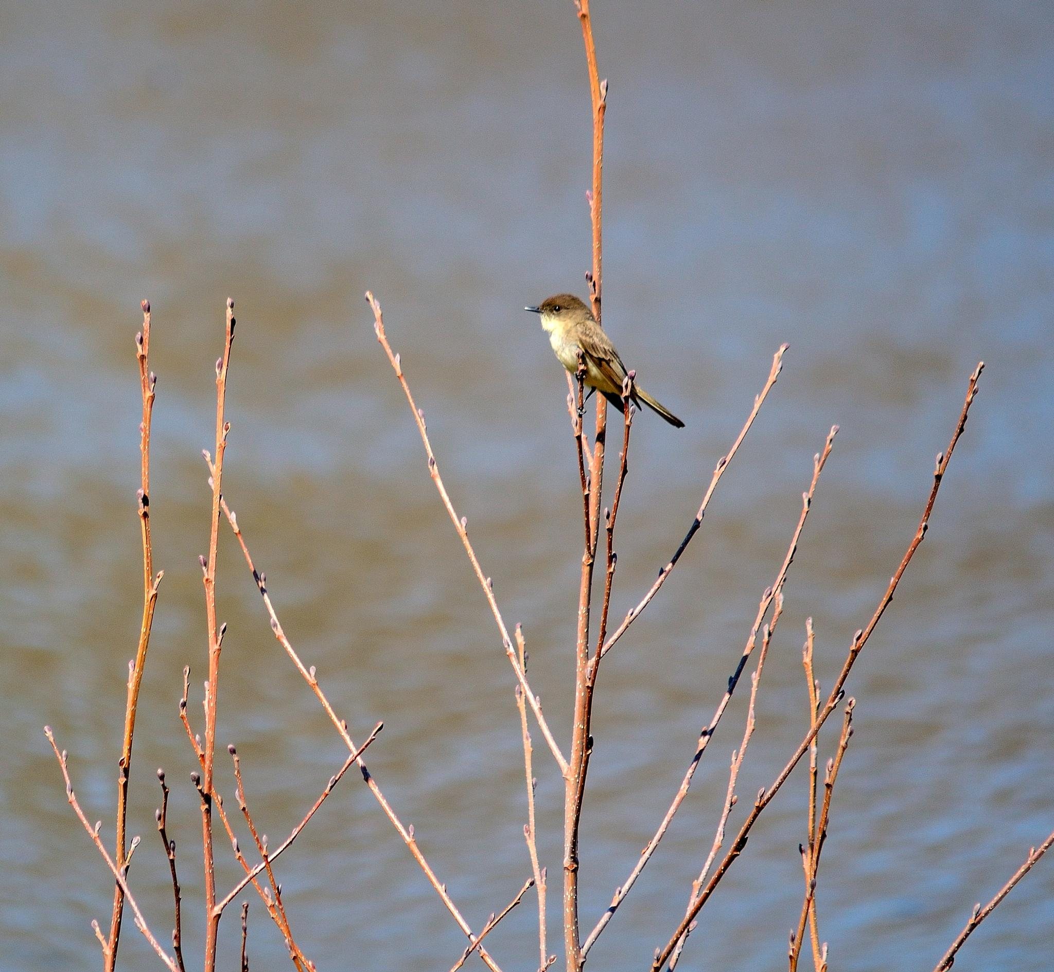 Spring Birdie by Tammy Gould