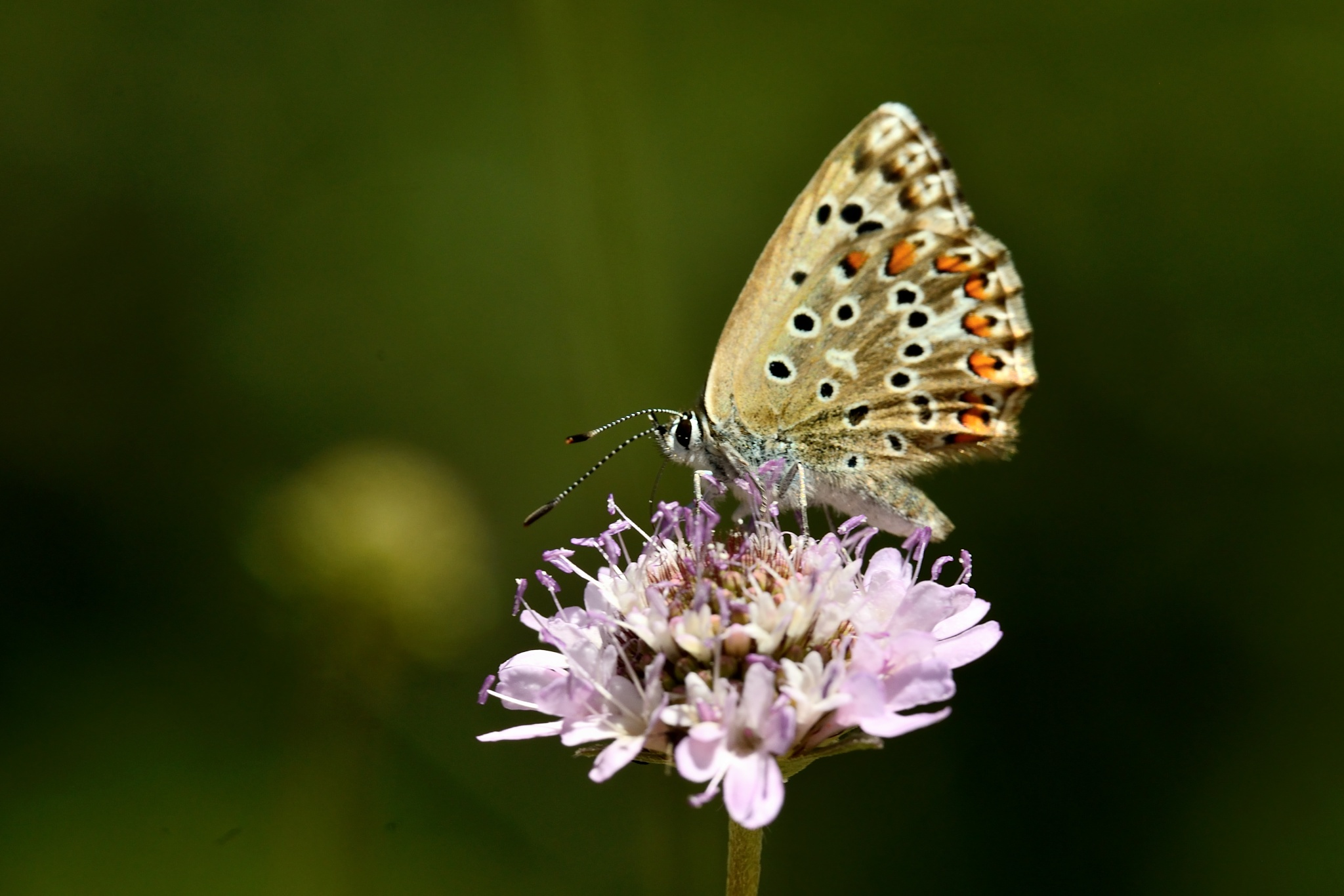 butterfly by miwwim