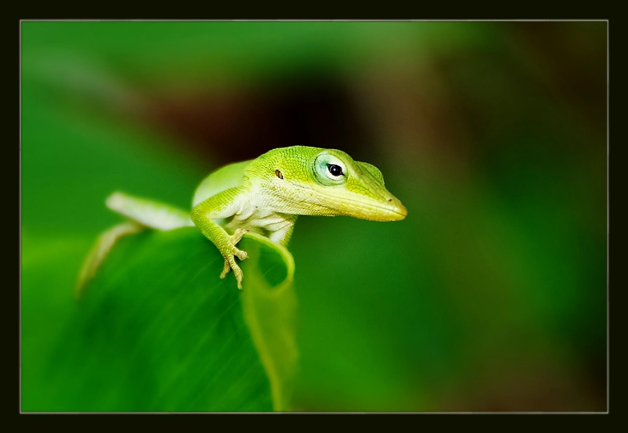 salamander by miwwim