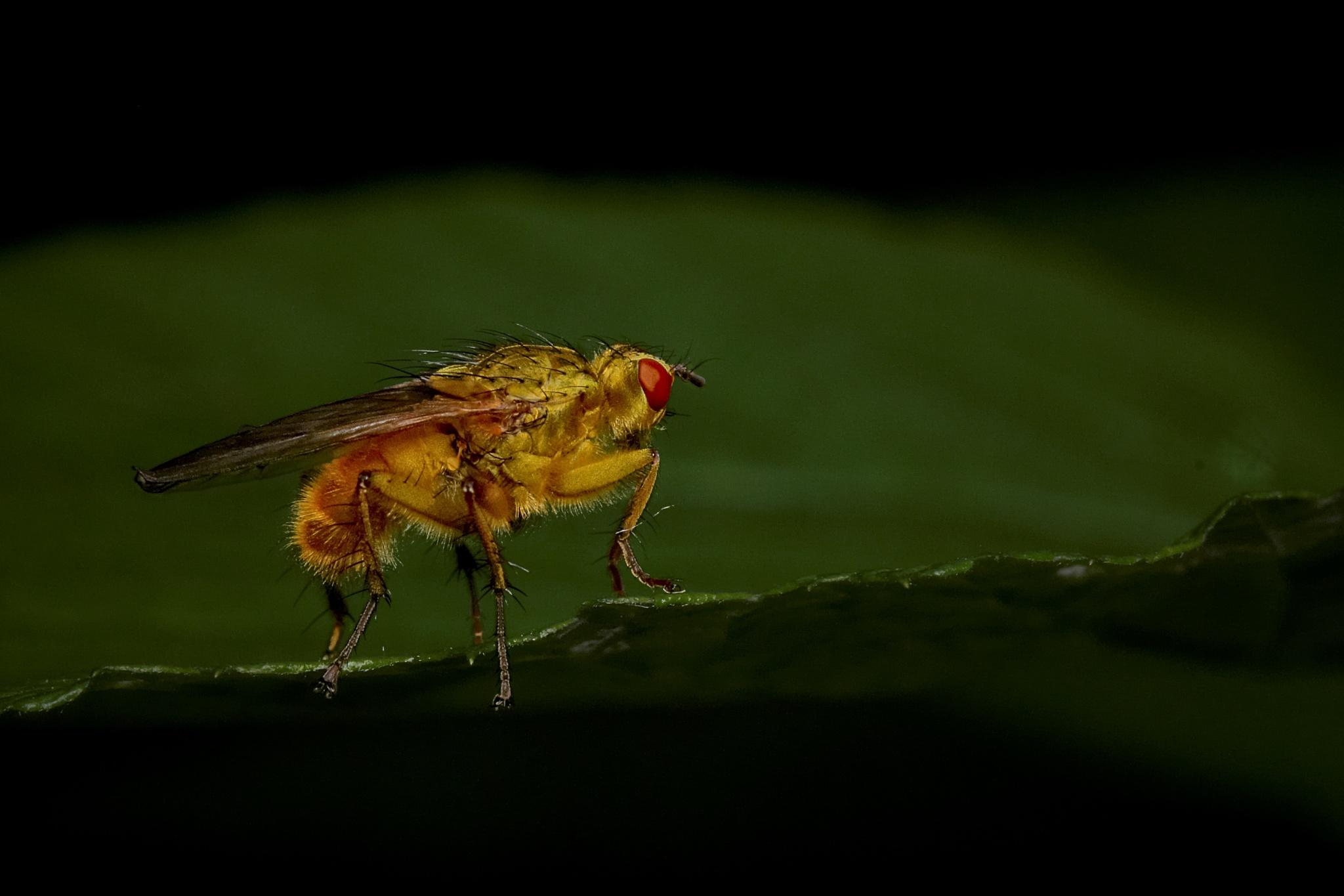 fly by miwwim