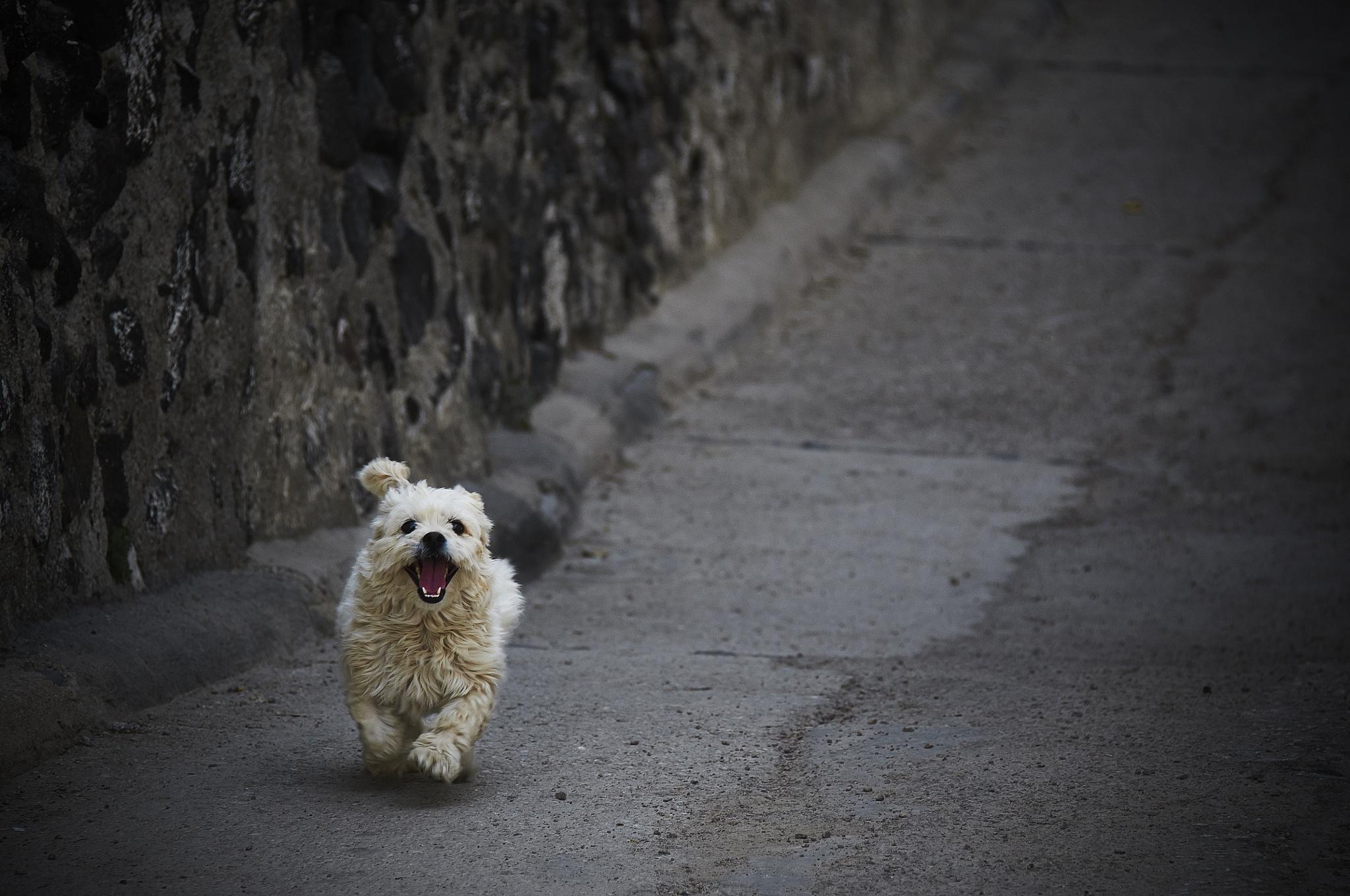 dog by miwwim