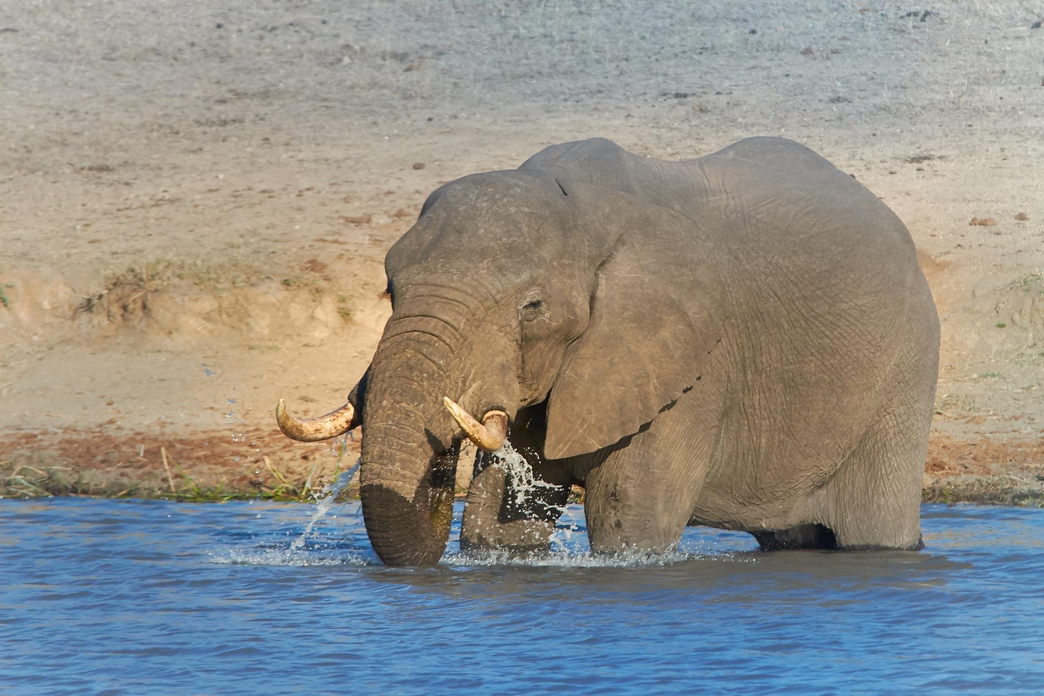 Water by miwwim