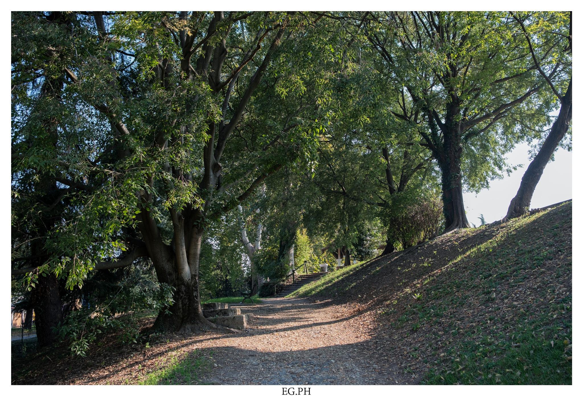 Park by Enrico Giacon