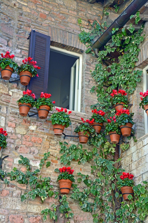 Flower Pots by Cesar Pedro