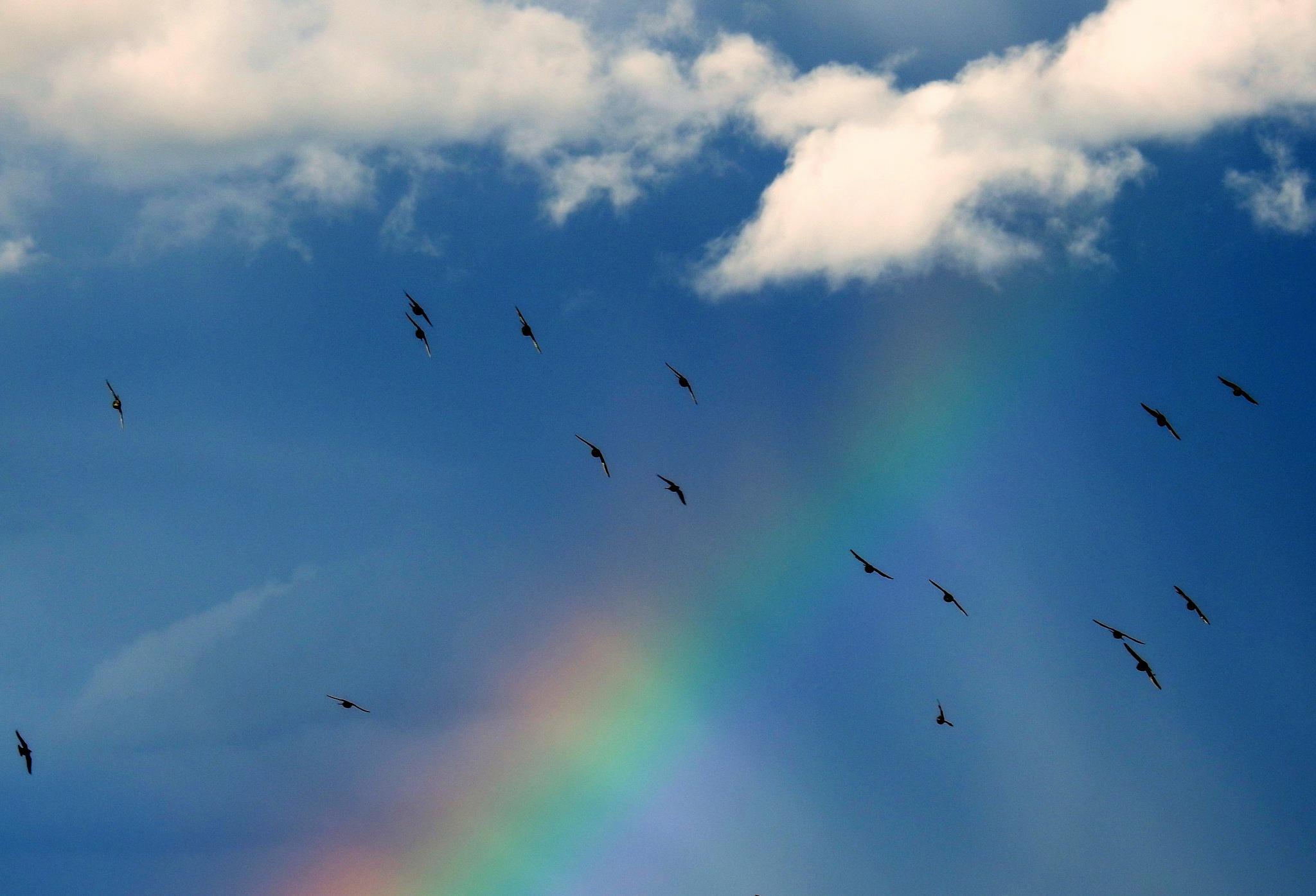 Over the rainbow by Sarah Fox