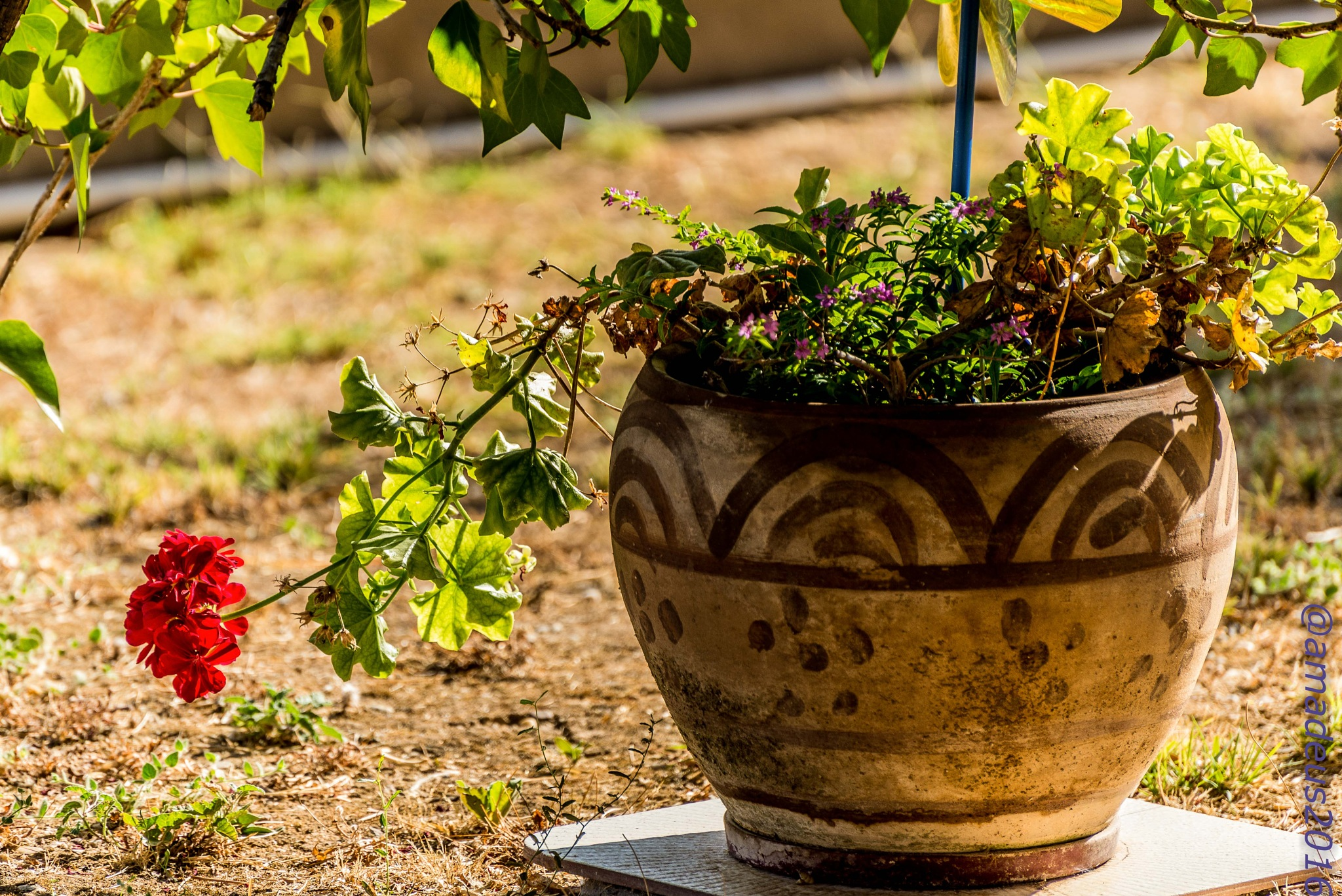 Potted plant by Amadeo Meg