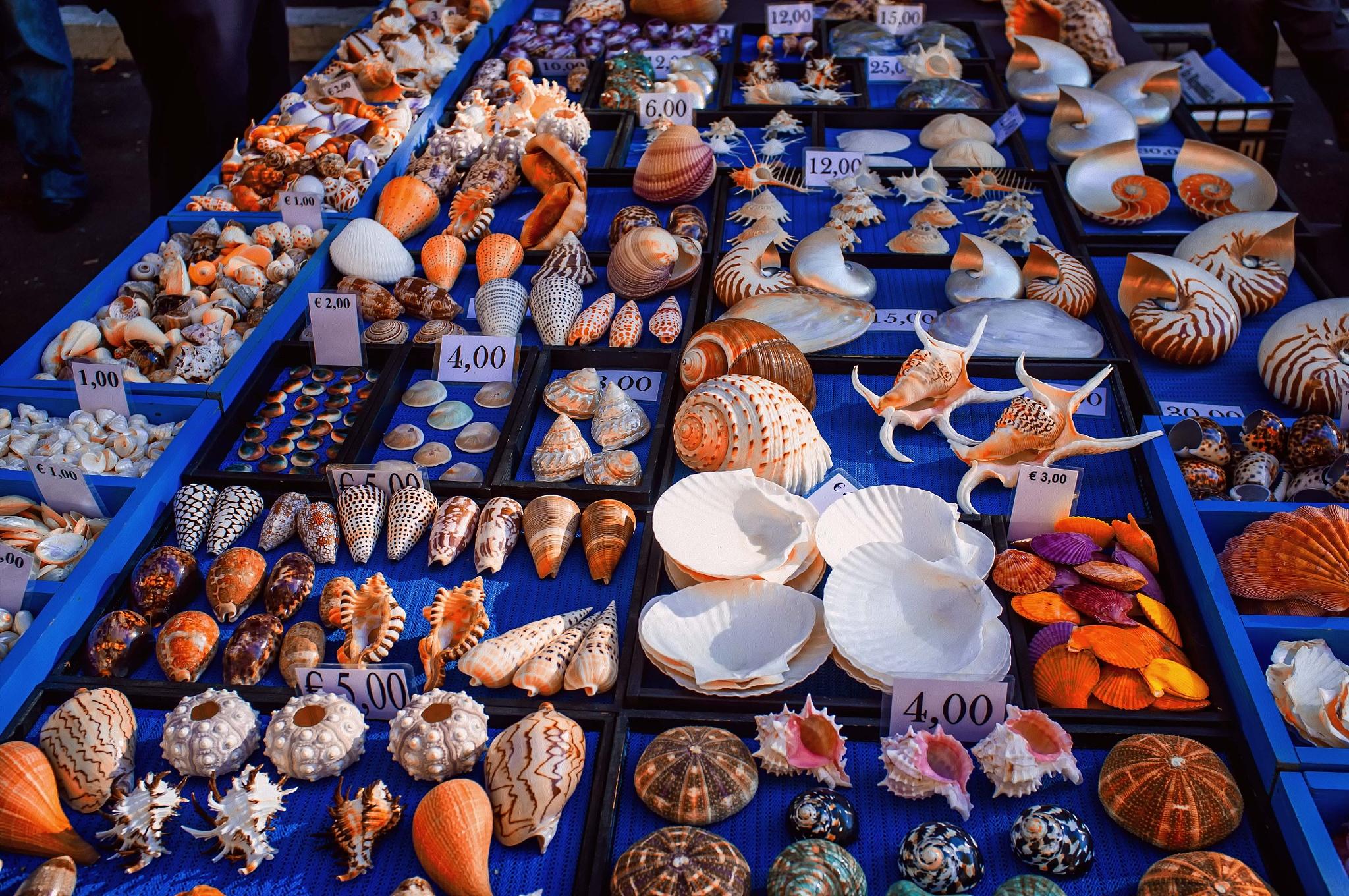 seashells by giovanni.petti.5