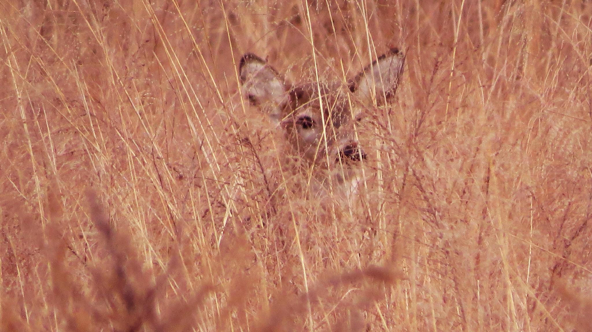 All In The Eyes 4 - Bambi Watching by Alisha Mari Crawford
