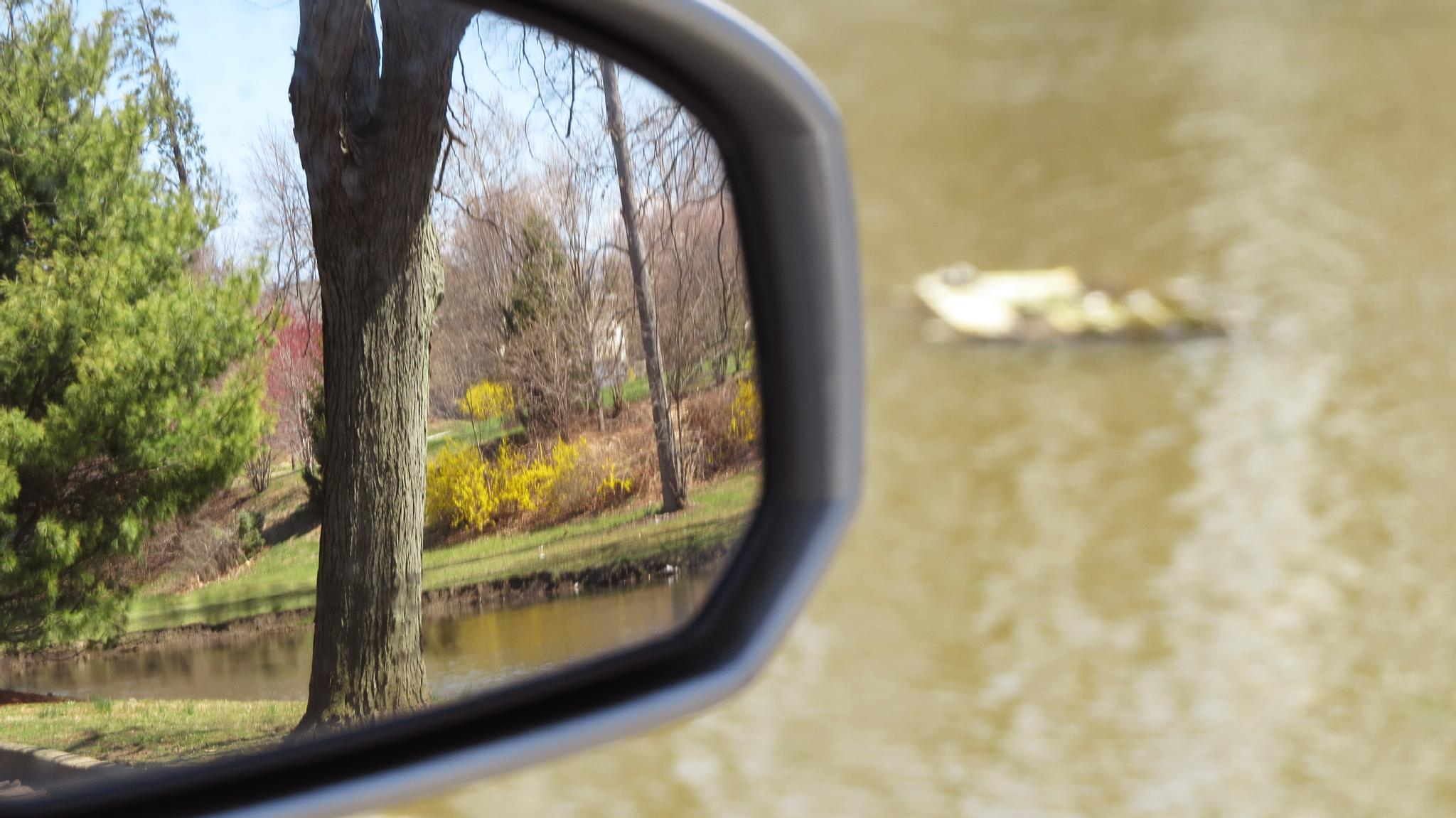 Can You Guess The Focal Point - 2 - Tree, Side Mirror, Pond  by Alisha Mari Crawford