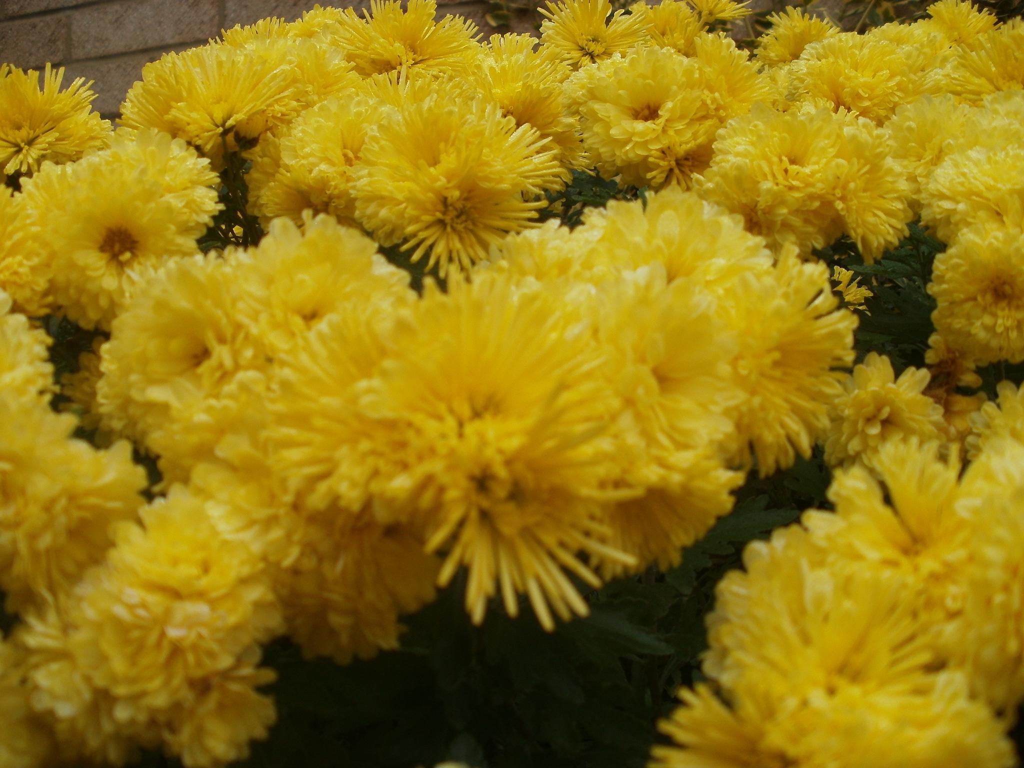 A Bunch of Yellow Flowers by kennaclarke