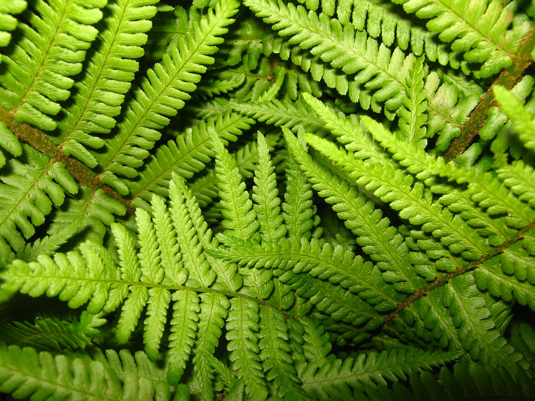 Fern by NatureBoy